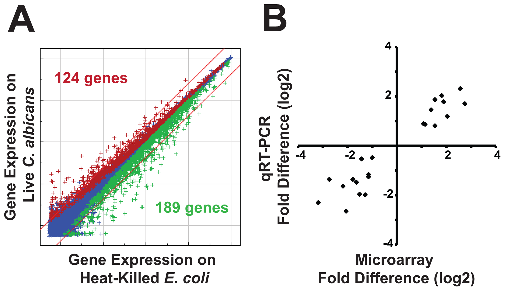 Infection with <i>C. albicans</i> yeast induces a rapid host response.