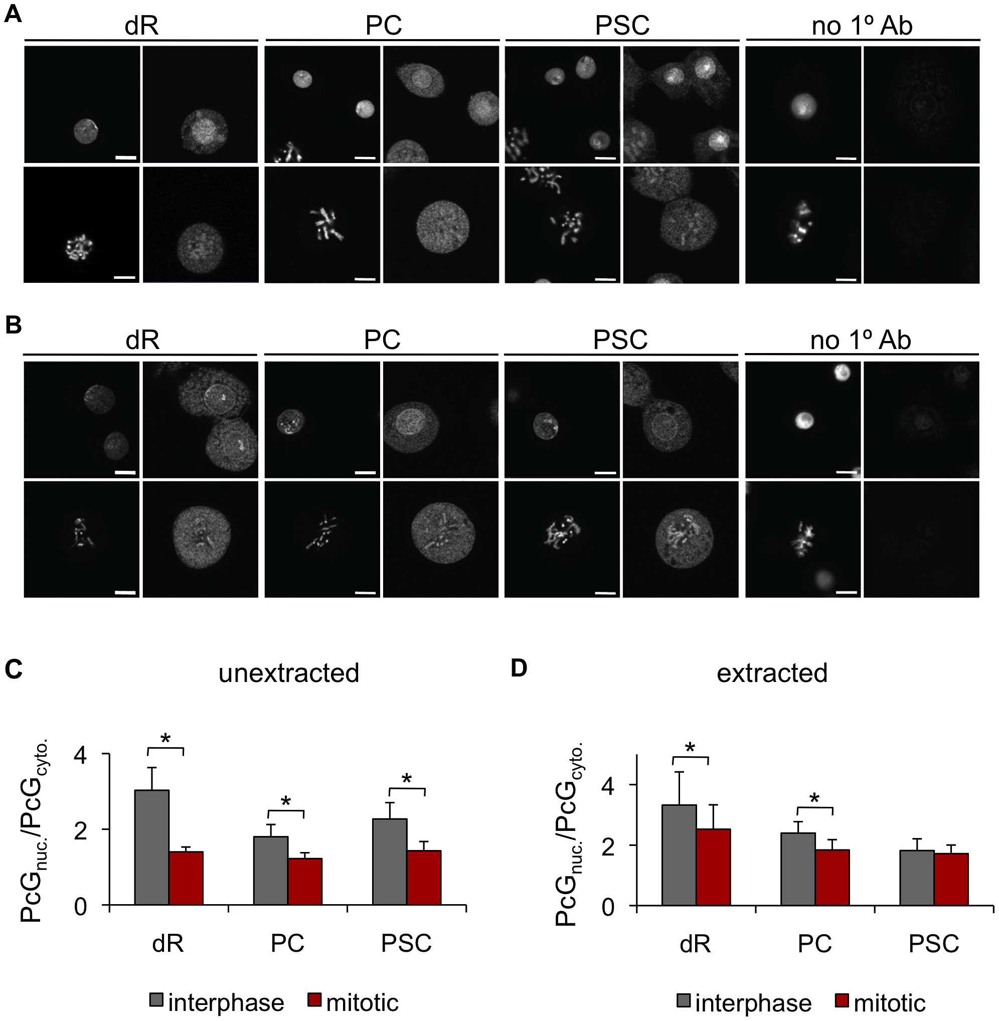 The PcG proteins PSC, PC, and dR are not excluded from mitotic chromosomes.