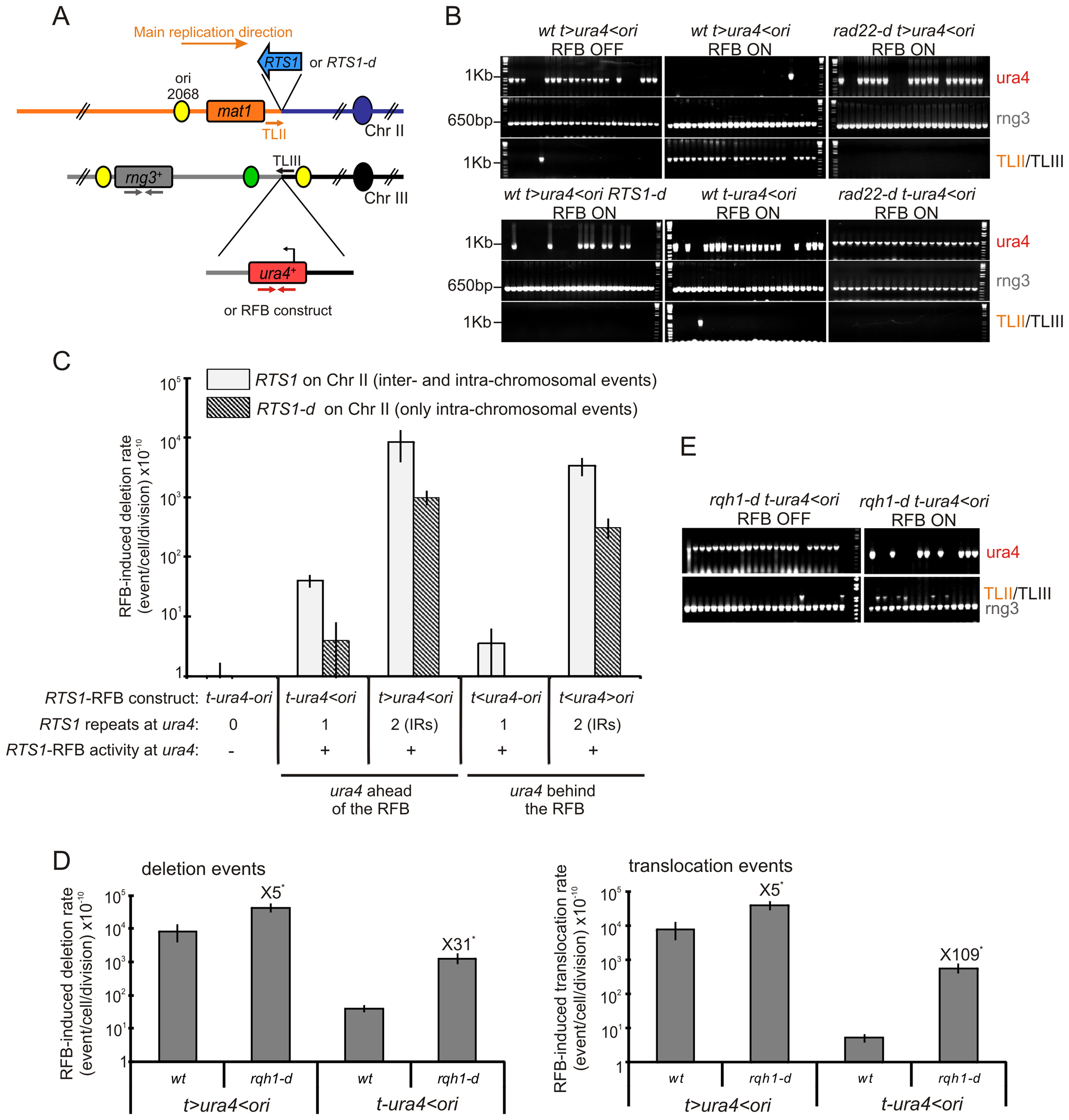 A single fork-arrest induces GCRs that are stimulated by inverted repeats near the site of fork arrest.
