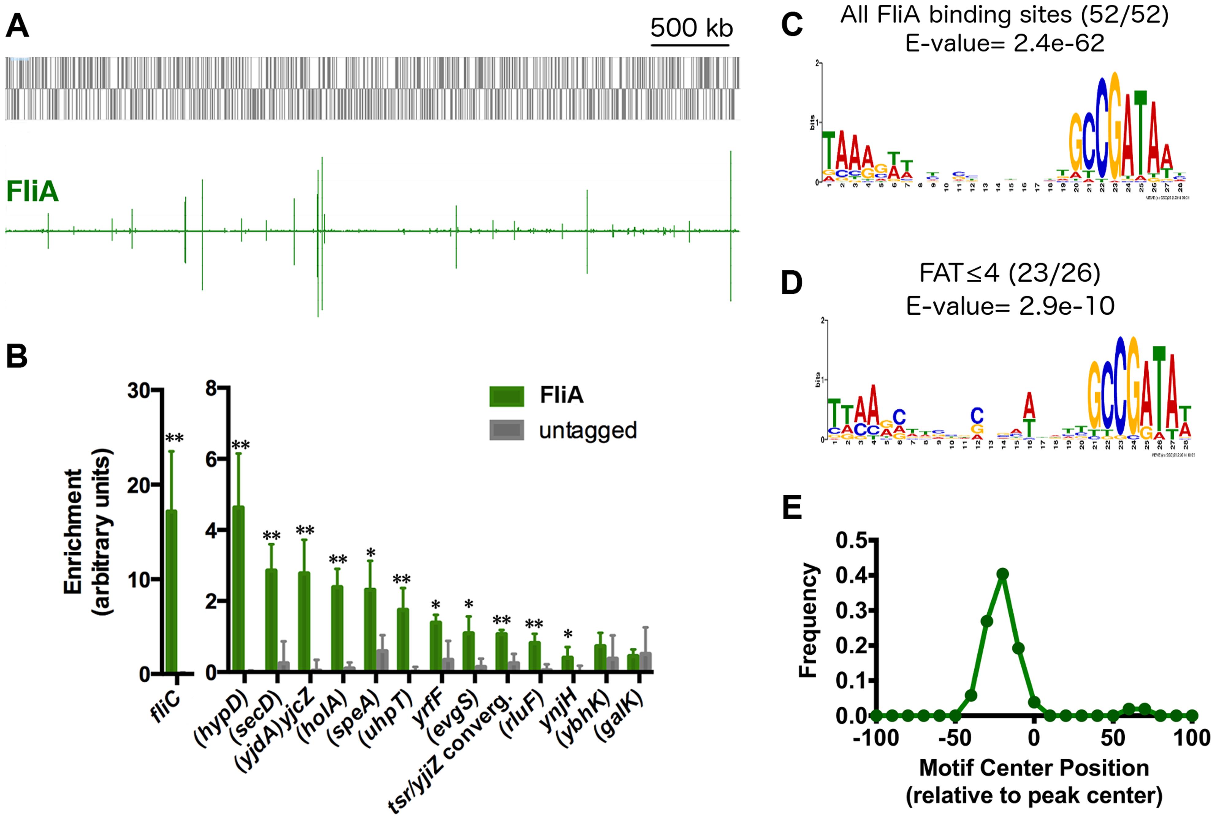 Genome-wide binding of FliA.