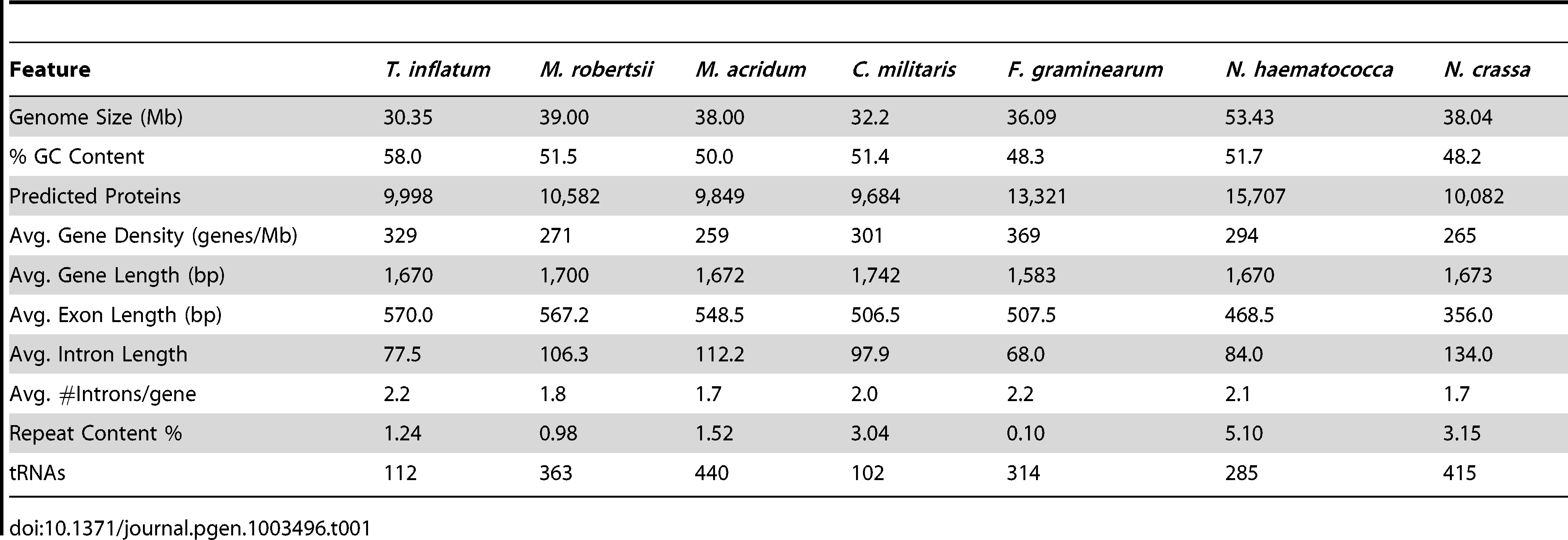 Comparison of genome features with closely related ascomycetes.