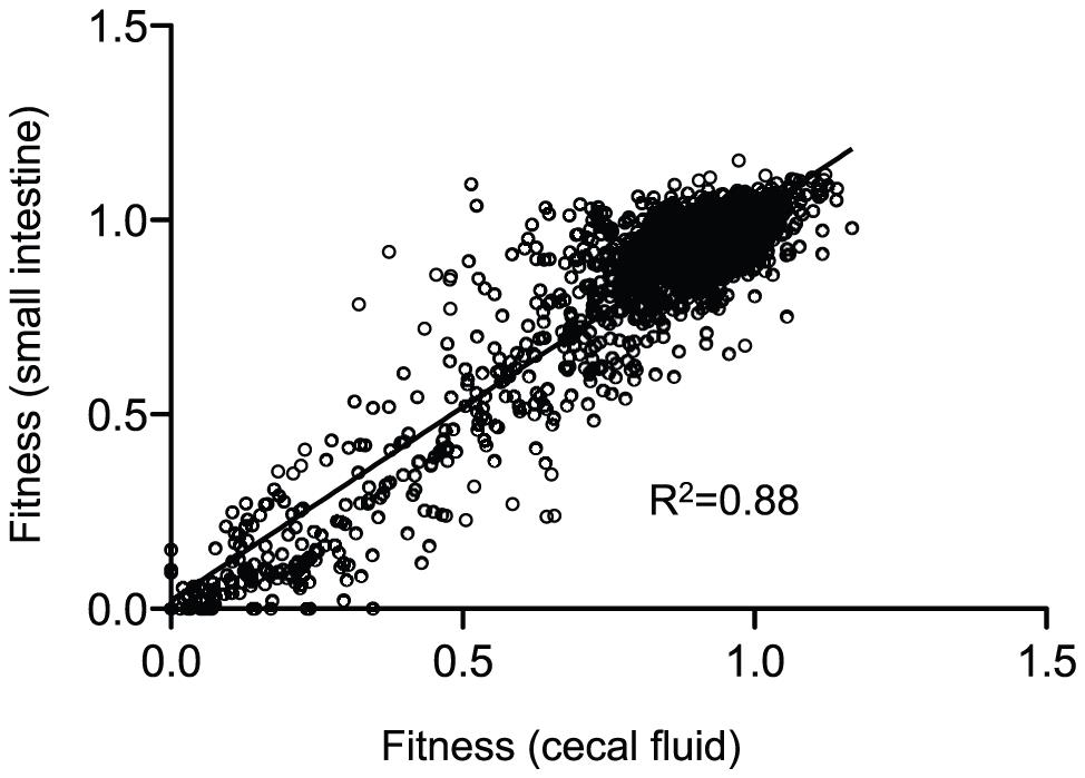A correlation plot of fitness values from host-passaged <i>V. cholerae</i>.