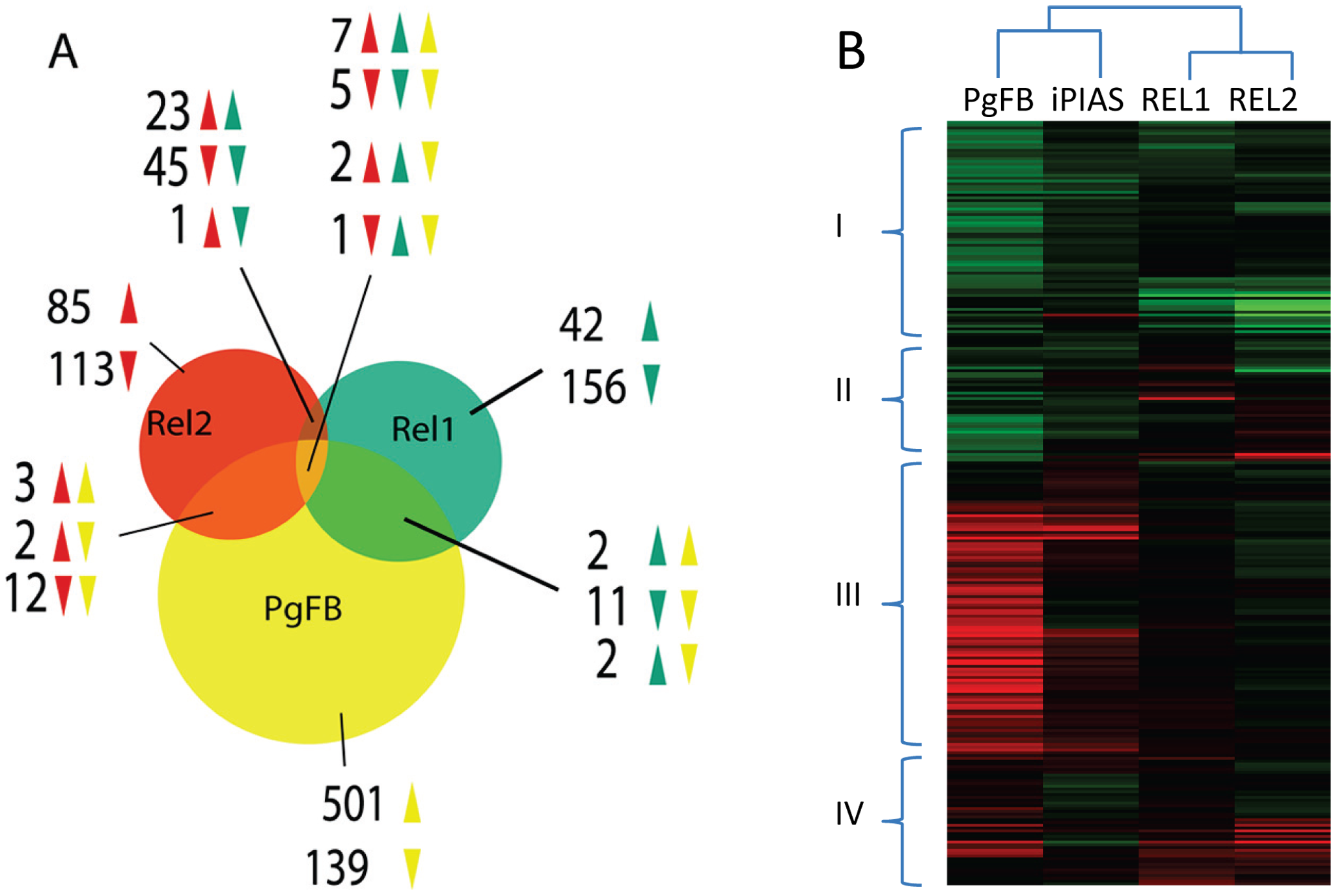Comparative analysis of the <i>P. gallinaceum</i> fat body responsive to the <i>REL1</i>- and <i>REL2</i>-regulated transcriptomes.