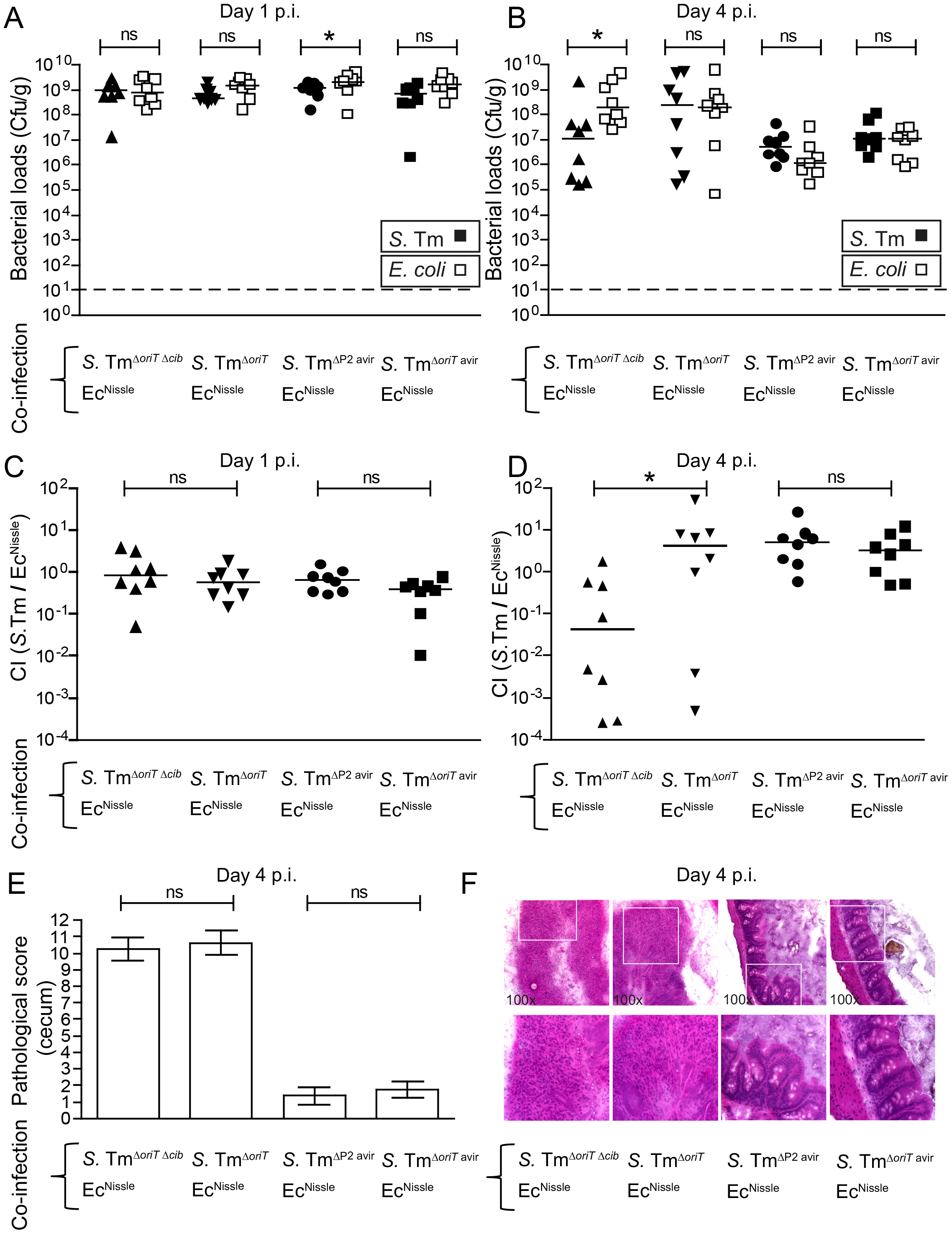 """Colicin-dependent competition of <i>S.</i> Tm and <i>E. coli</i> in the gut in inflammation-induced """"blooms"""" in conventional mice."""