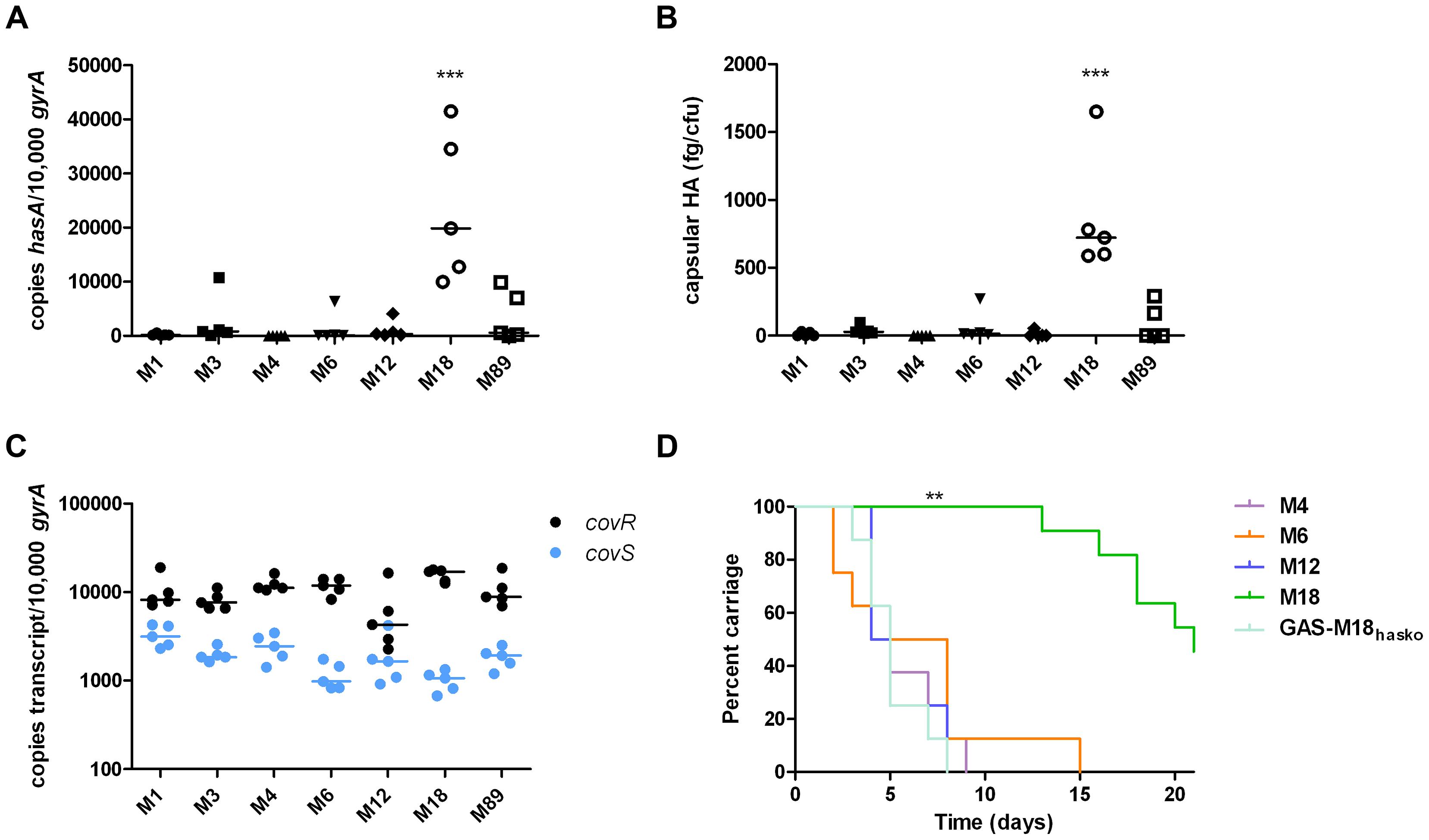 Serotype M18 GAS display a unique hyper-encapsulation phenotype which mediates enhanced nasopharyngeal carriage longevity.
