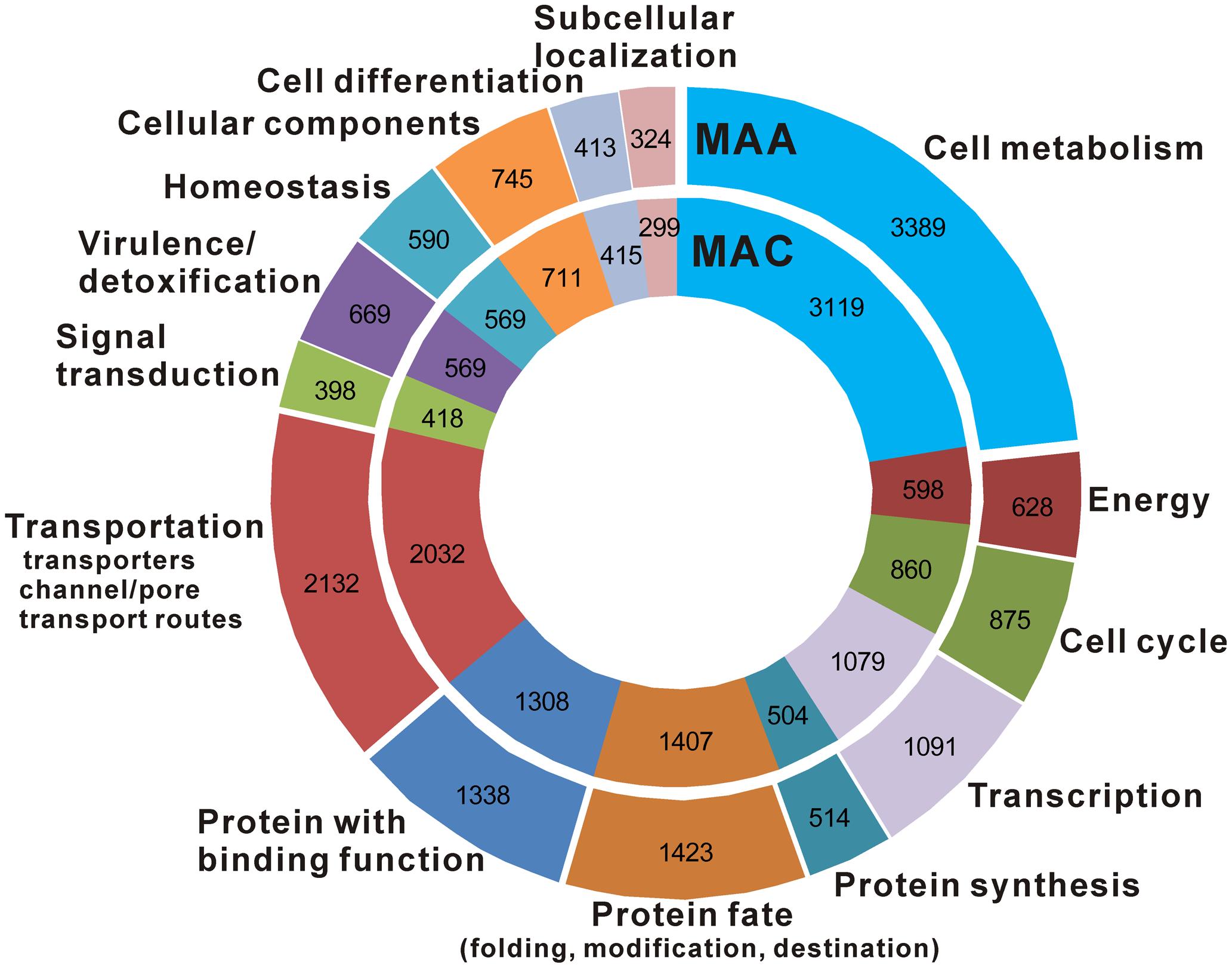 Functional classification and comparison of <i>M. anisopliae</i> and <i>M. acridum</i> proteins.