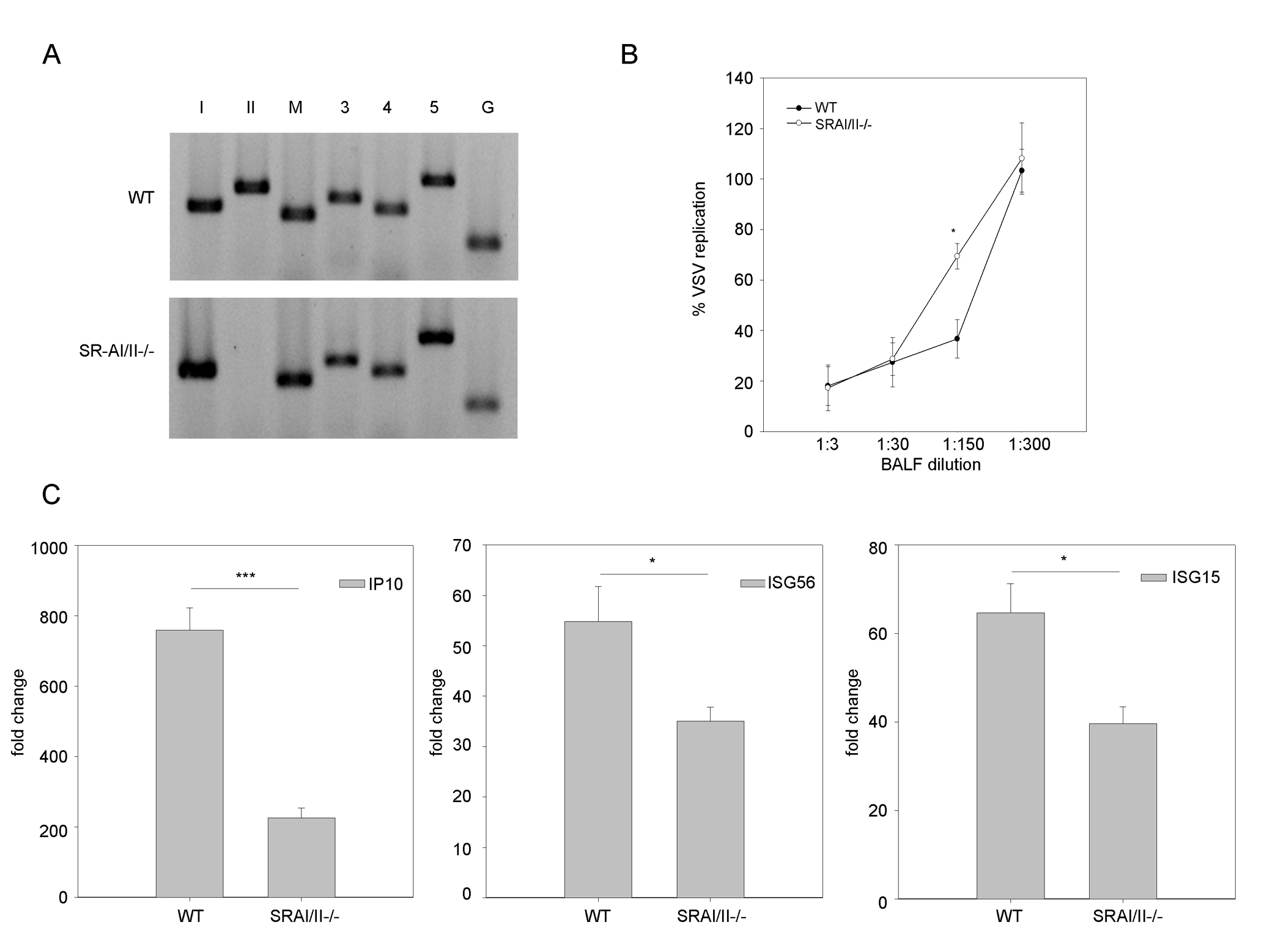 SR-As are involved in dsRNA induced antiviral responses <i>in vivo</i>.