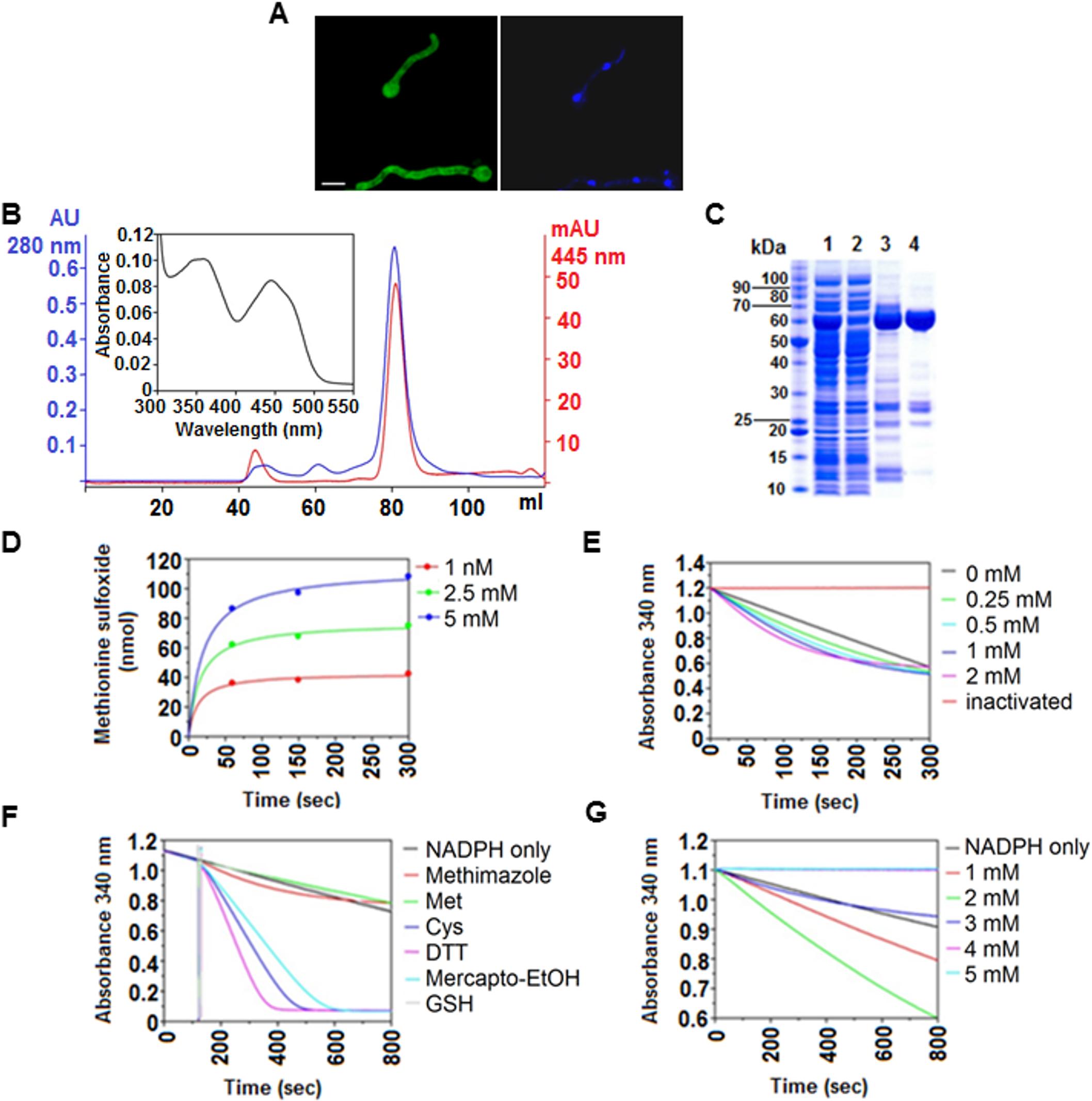 <i>In vivo</i> and <i>in vitro</i> characteristics of FmoB.