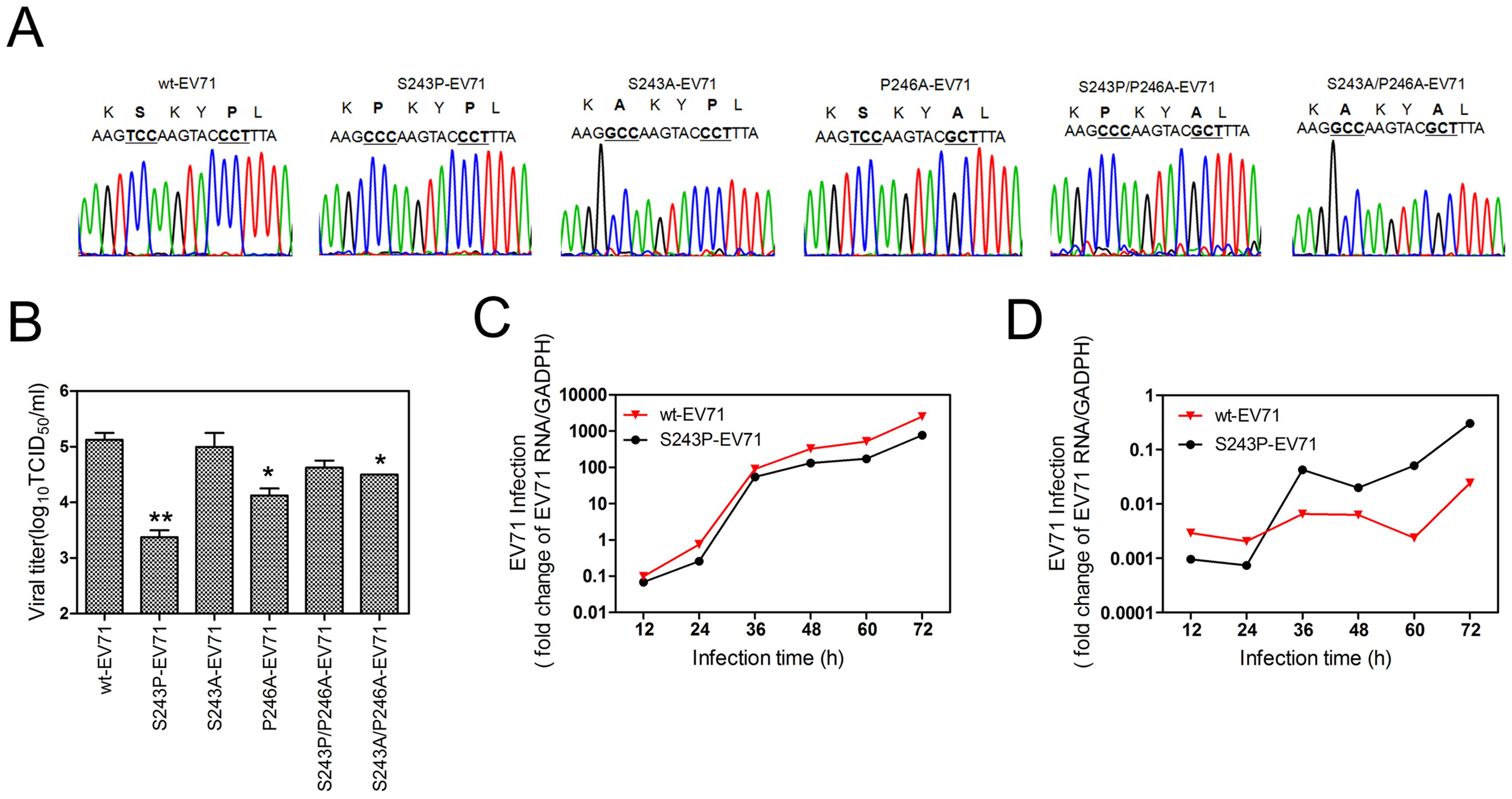 An analysis of various H-I loop mutant viruses.