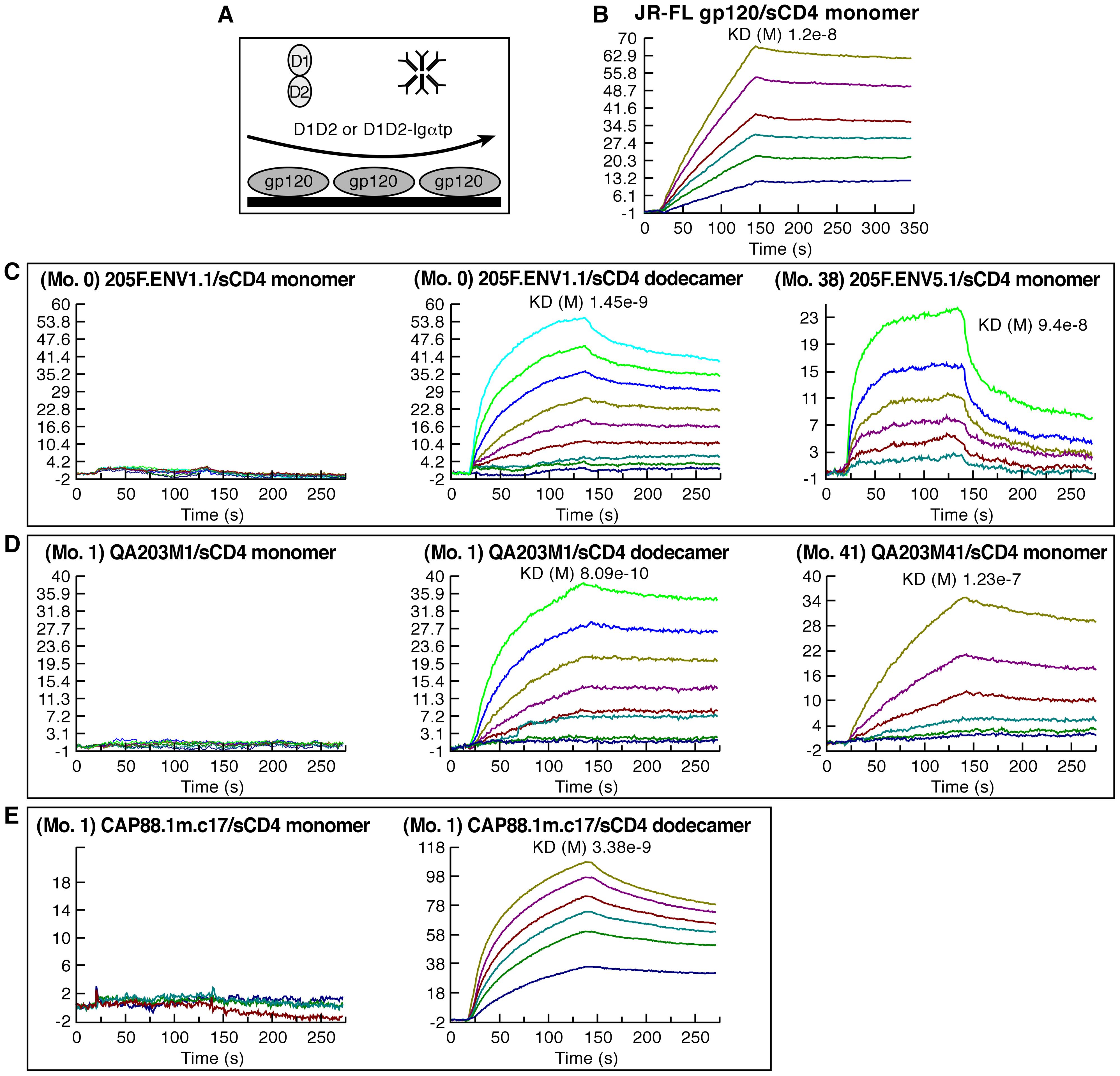 CD4 binding characteristics of early-transmitting gp120s.