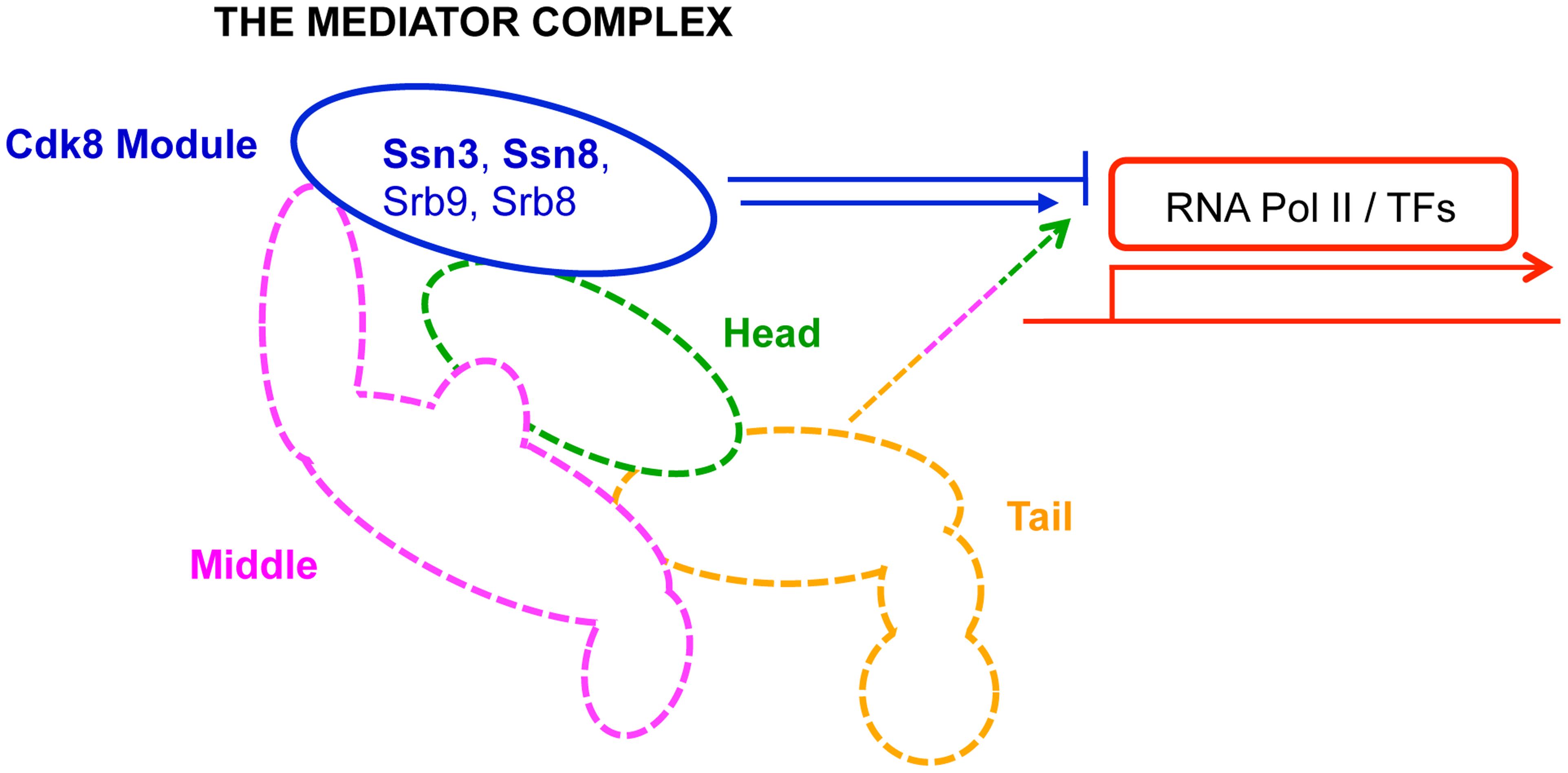 Primary role of Mediator modules in transcription.