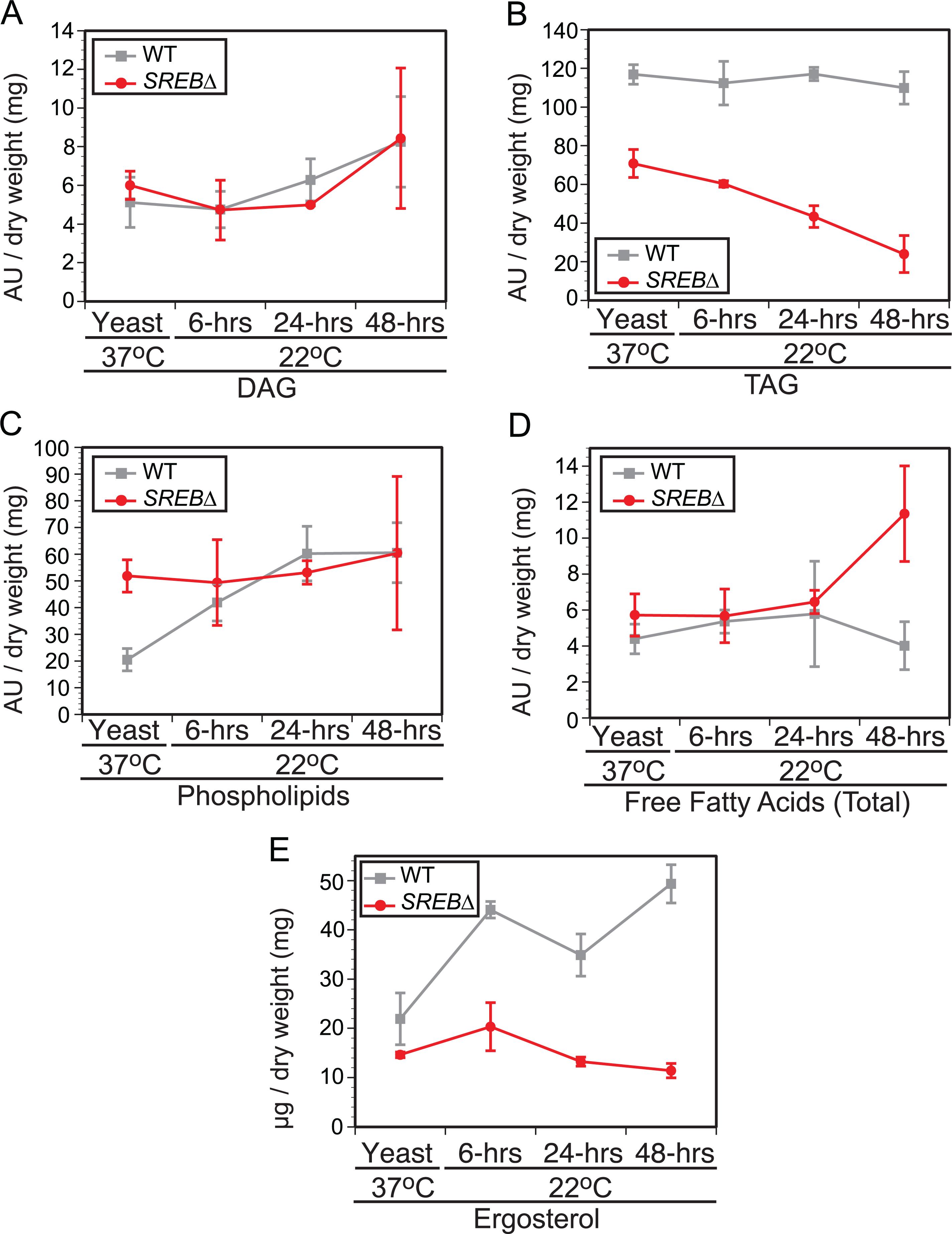 Impact of <i>SREB</i> on lipid biosynthesis.