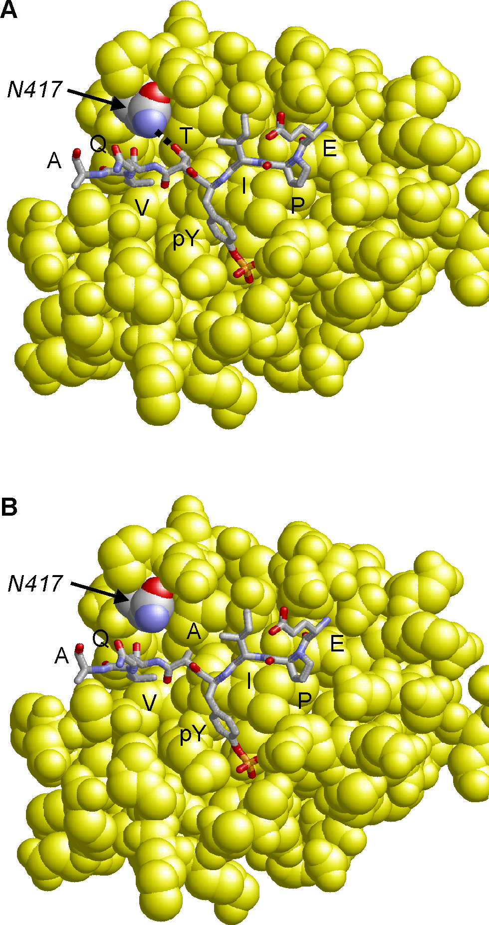 Model of the CagA B-TPM motif variants bound to PI3-kinase.