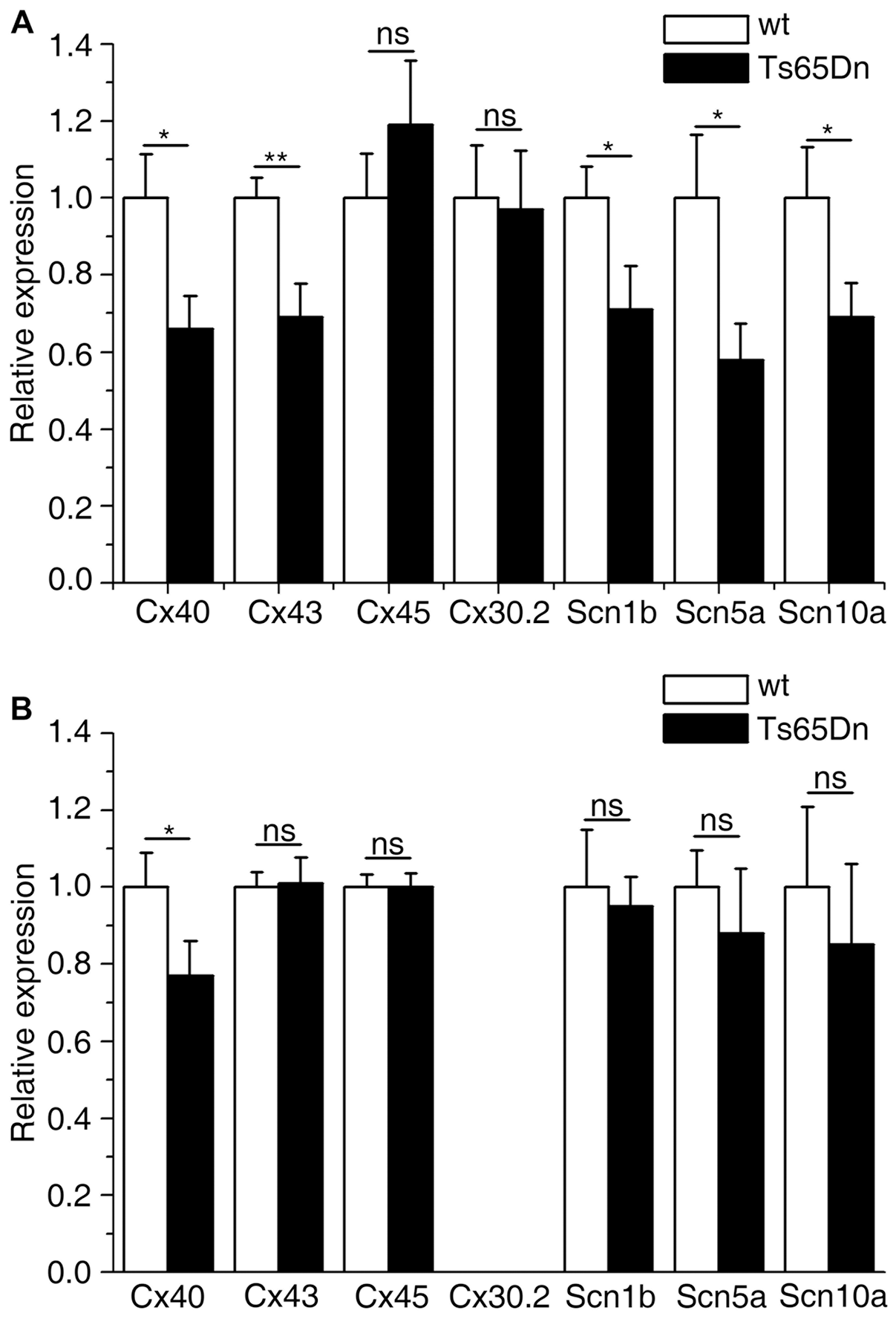 Atrial and ventricular connexins and sodium channel genes expression levels in wt and Ts65Dn mice.