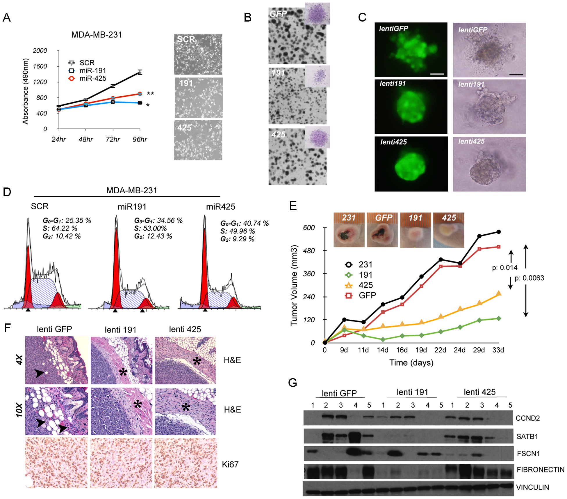 miR-191/425 cluster impairs tumorigenicity of aggressive breast cancer cells.