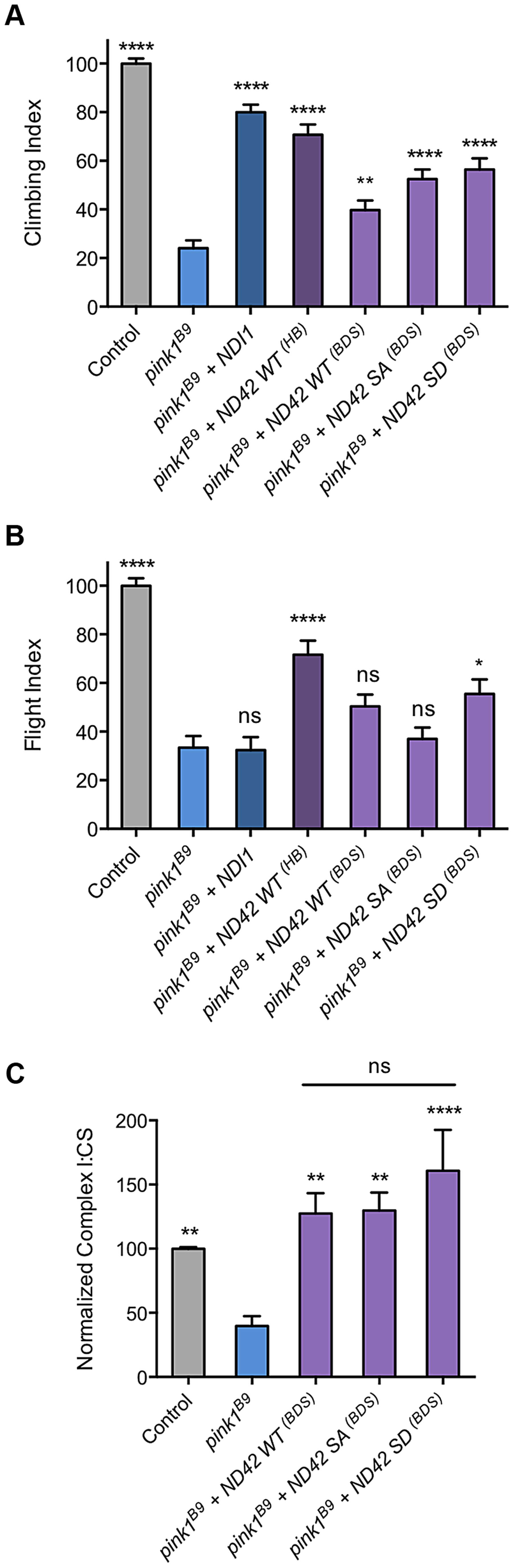 Analysis of ND42 Ser-250 phospho-variant rescue of <i>pink1</i> mutant climbing defect and complex I deficiency.