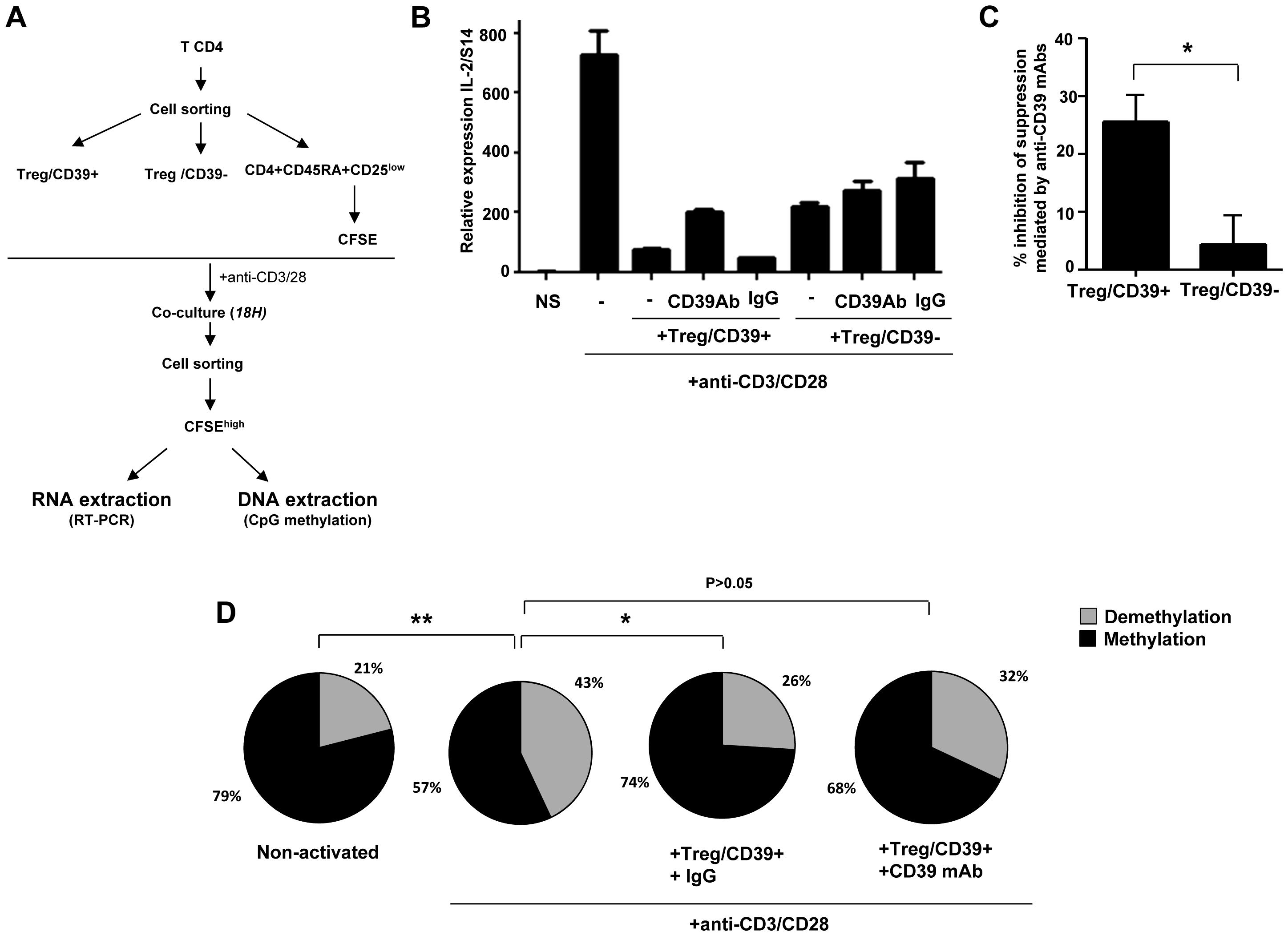 Treg inhibit IL-2 production via the CD39 pathway.