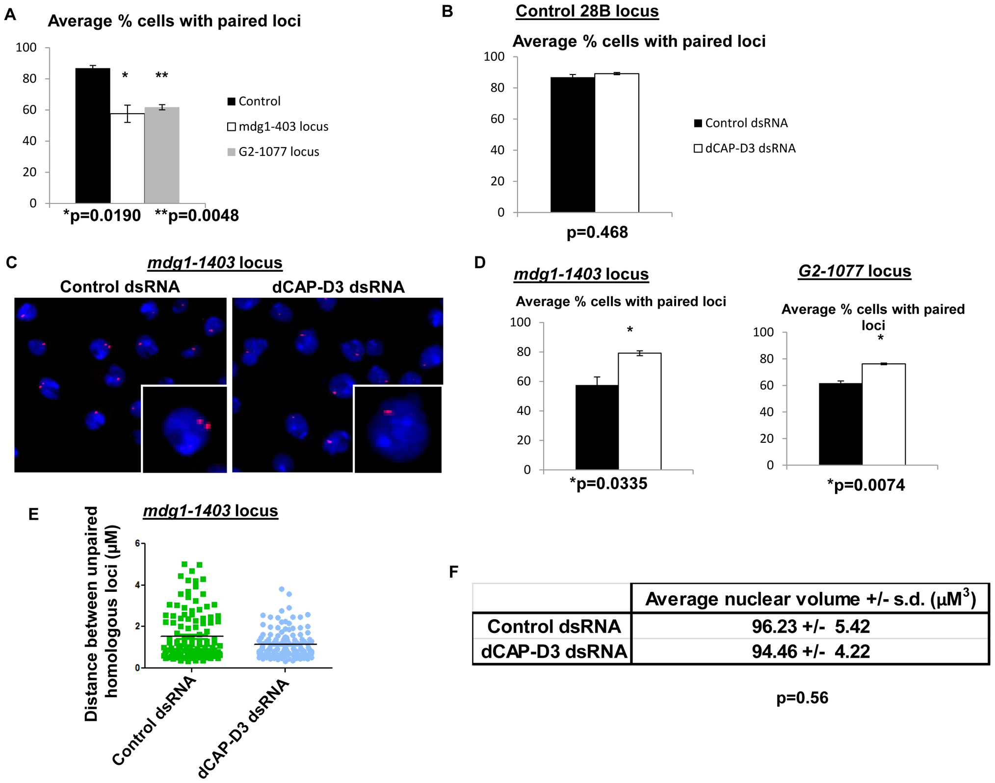 Pairing of retrotransposon loci on homologous chromosomes is increased in cells treated with dCAP-D3 dsRNAs.