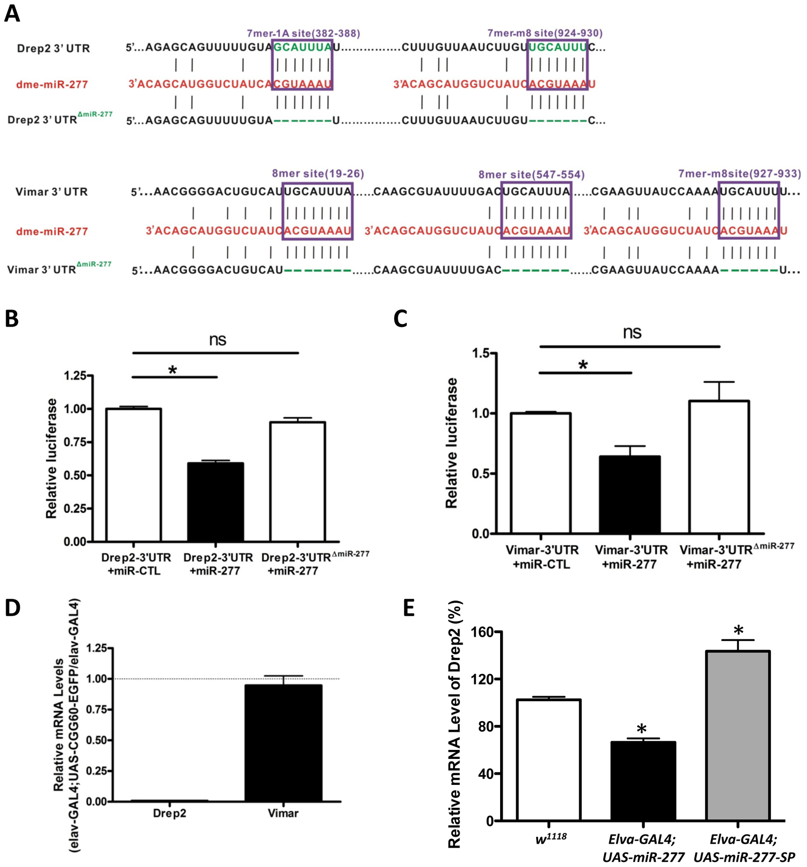 MiR-277 regulates the expression of Drep-2 and Vimar post-transcriptionally.