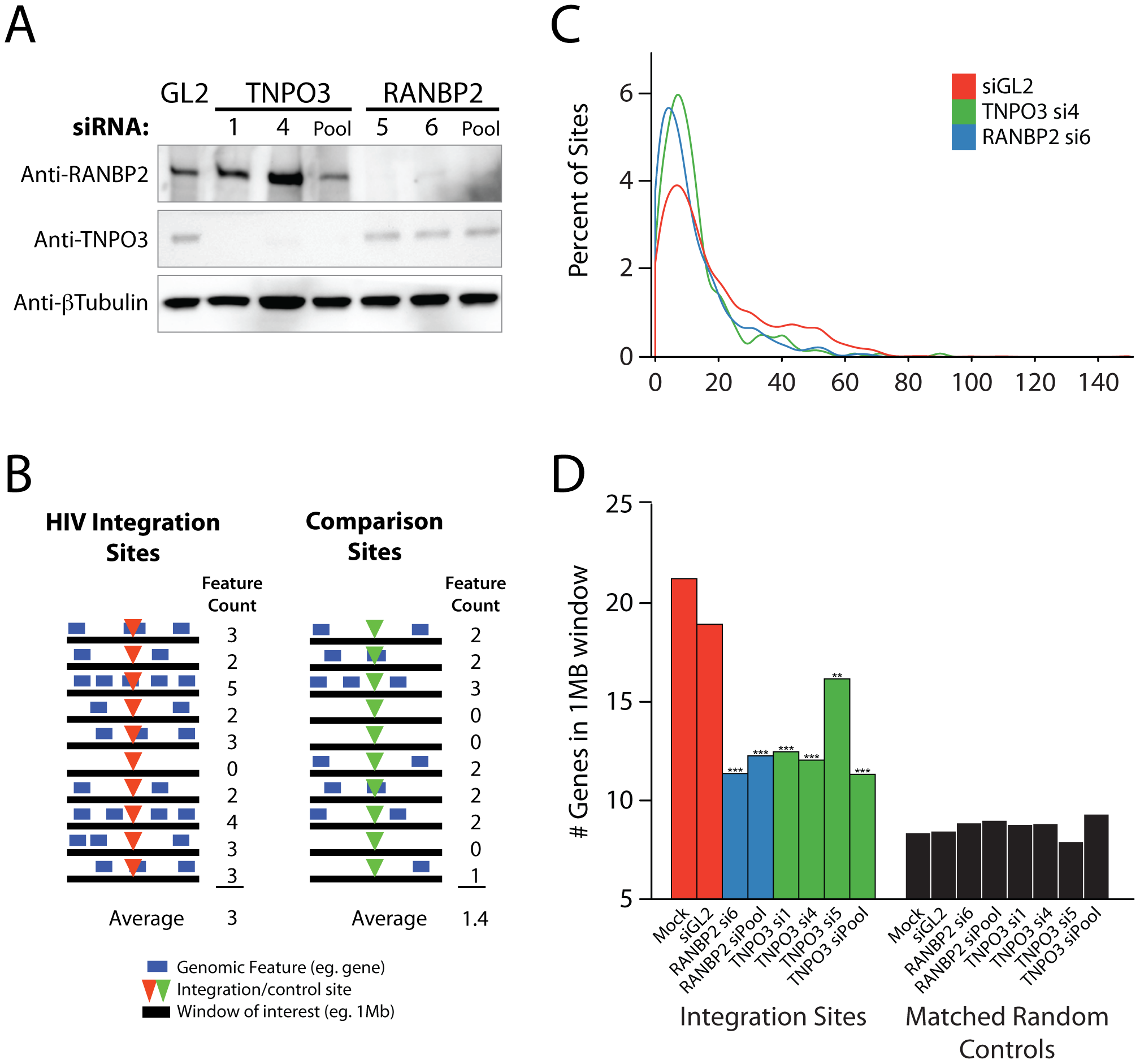 Effects of siRNA treatments on HIV integration in gene dense regions.