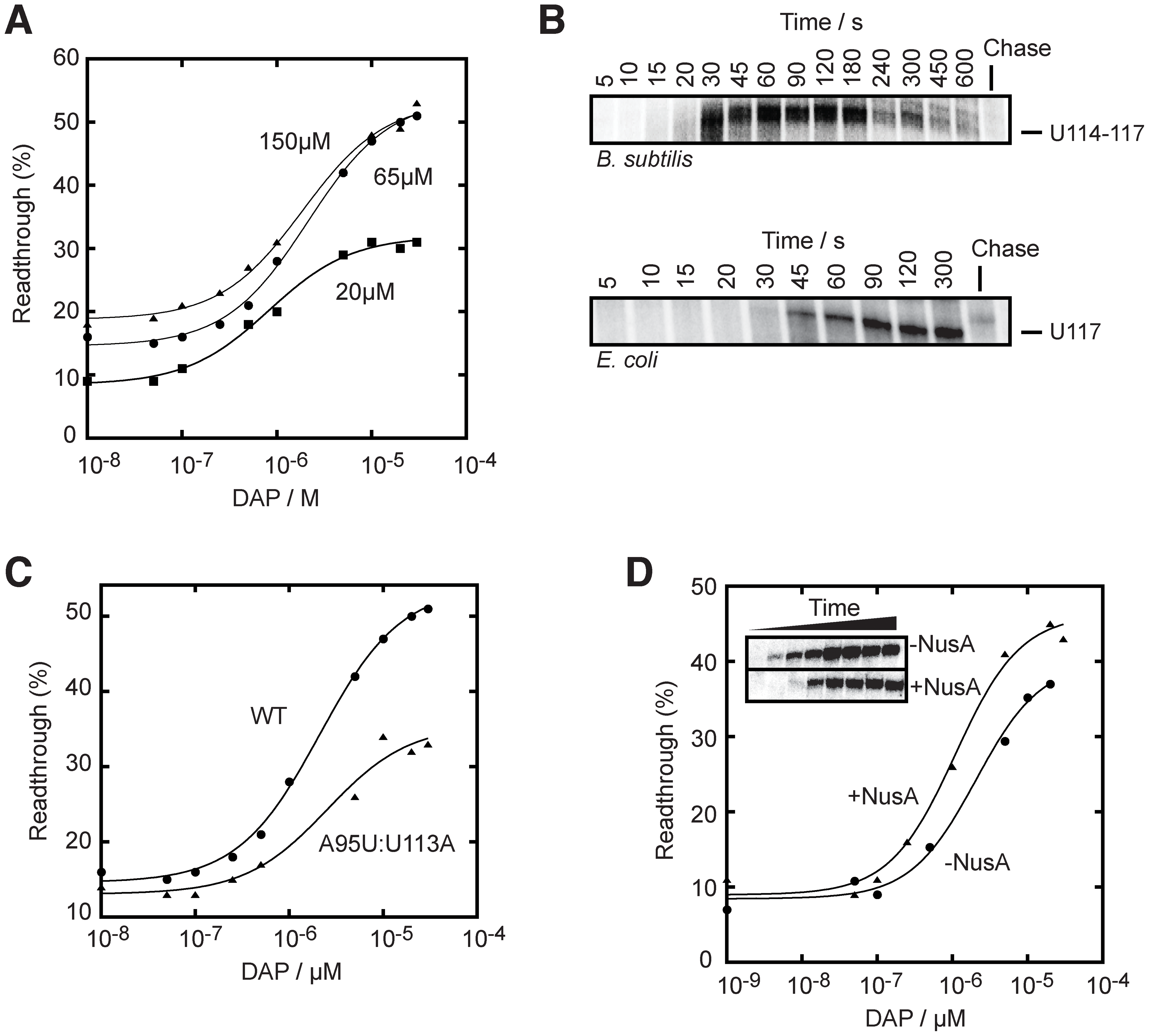 The rate of transcription is important for the <i>pbuE</i> riboswitch activity.