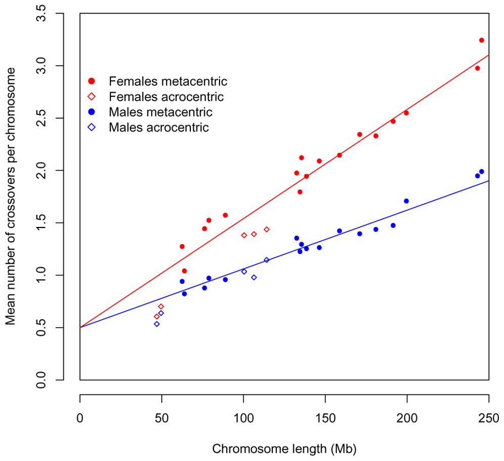 The total recombination rate per chromosome, in males and females, as predicted by an obligate chiasma per bivalent (i.e, an intercept at 0.5 crossovers per gamete) and the physical length of the chromosome.