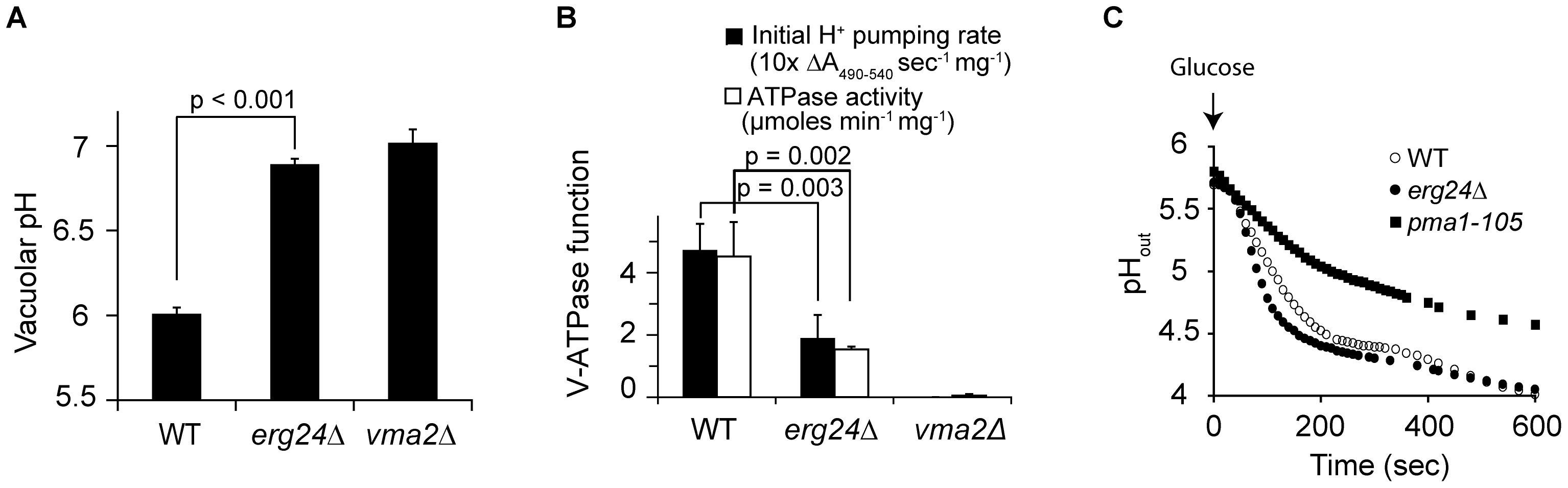 ERG24 deletion impairs the function of V-ATPase but not Pma1p.