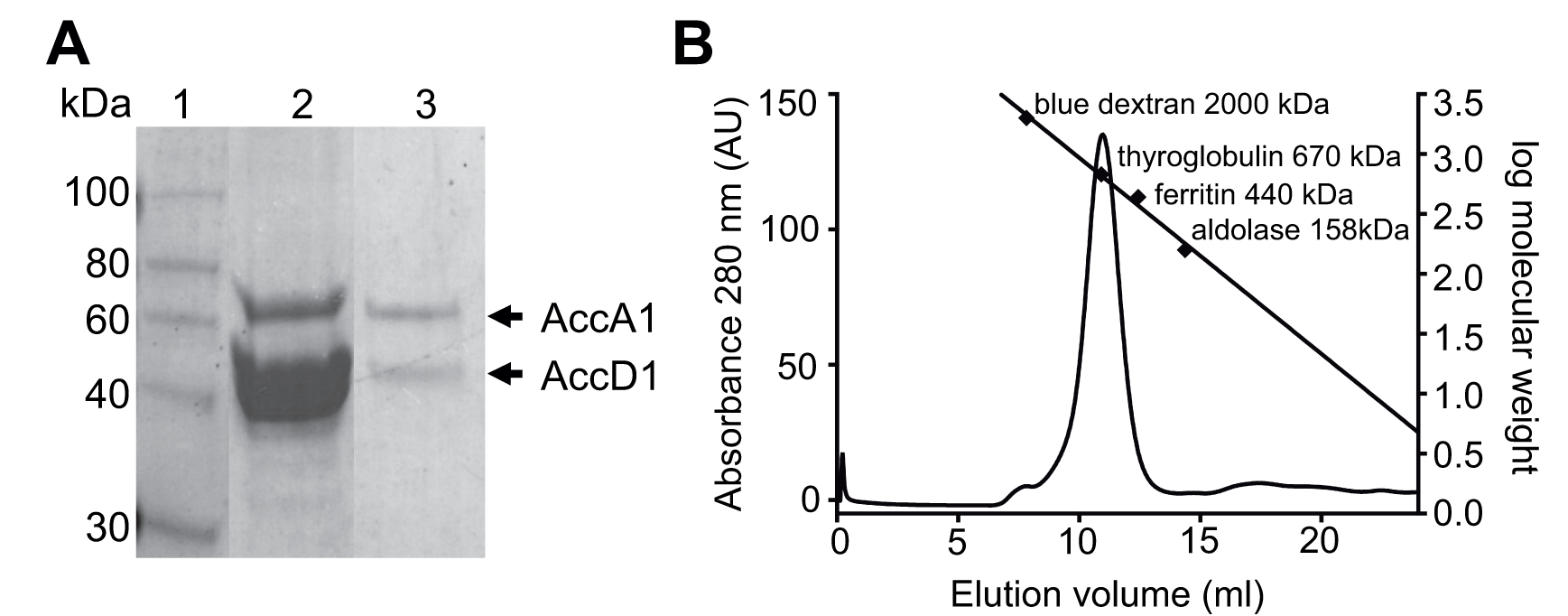 AccD1-AccA1 holo complex formation.