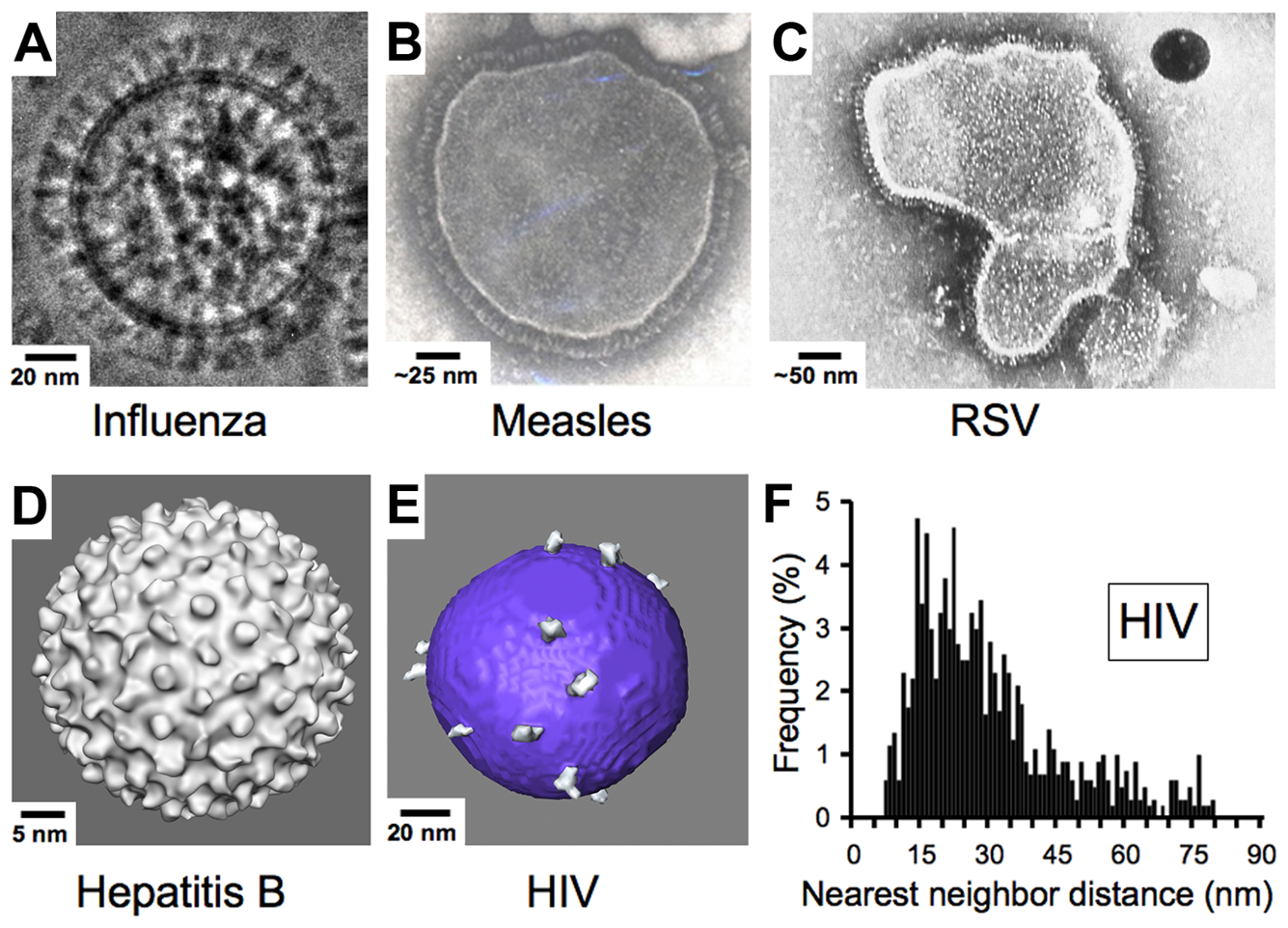 Comparison of enveloped viruses and nearest neighbor distances for HIV envelope spikes.