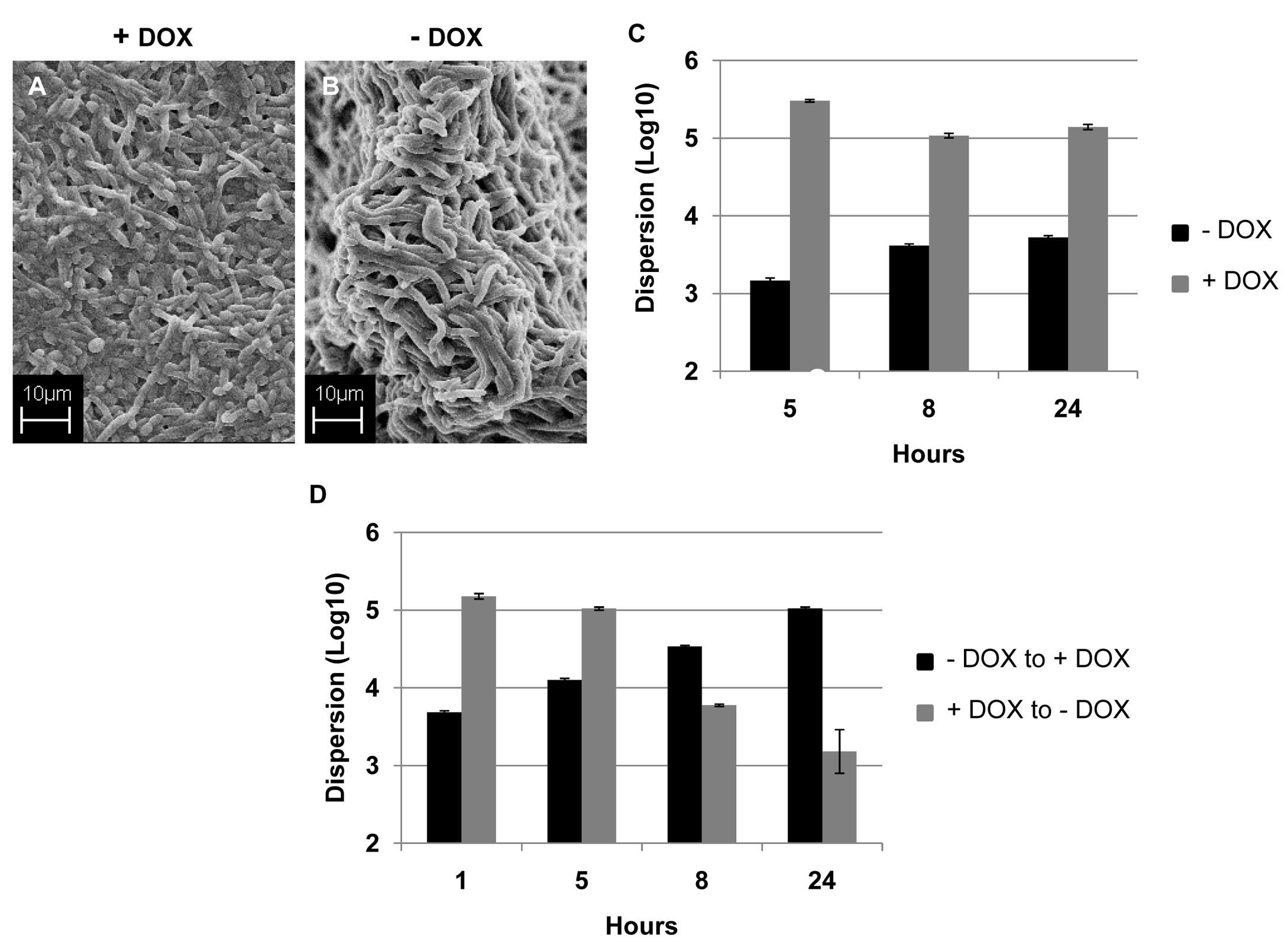 Regulation of <i>C. albicans</i> biofilm dispersion by <i>UME6</i>.