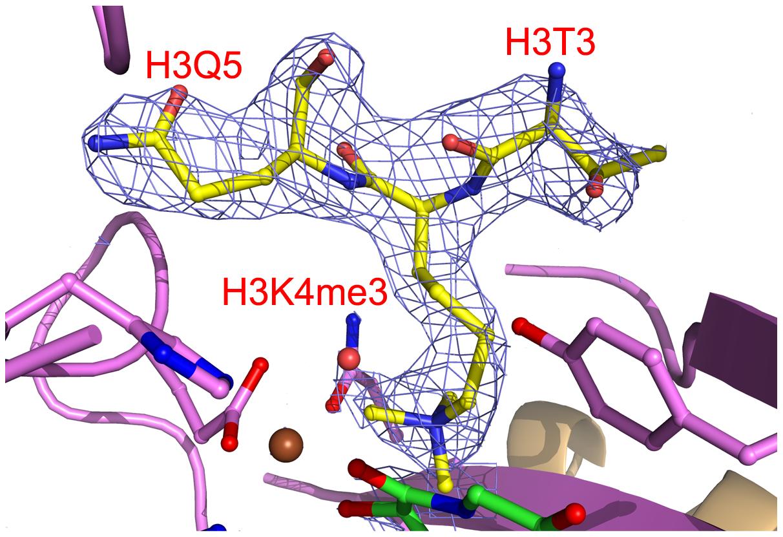 Electron density of bound H3K4me3.