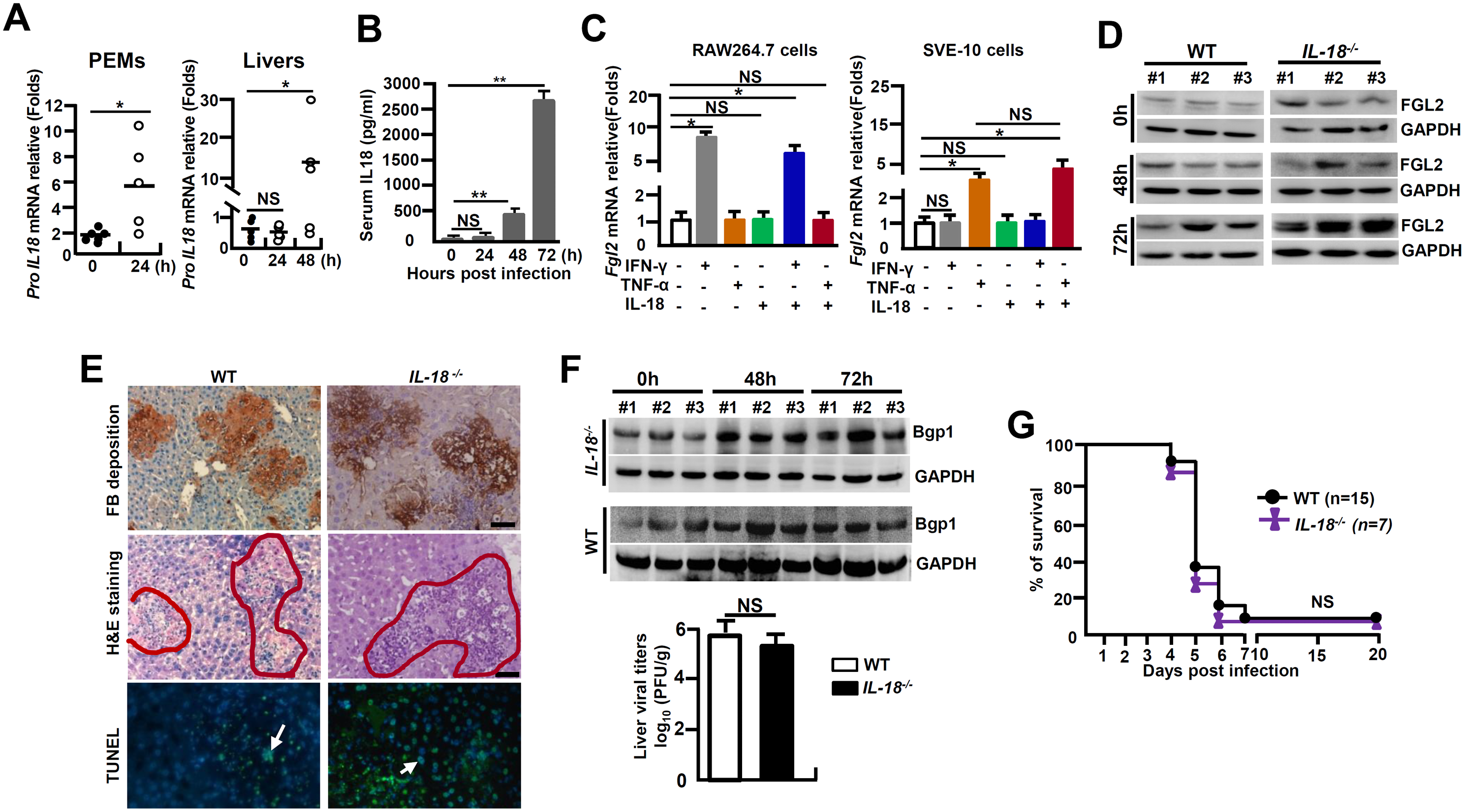 <i>IL-18</i><sup><i>-/-</i></sup> mice are susceptible to MHV-3-mediated hepatitis.