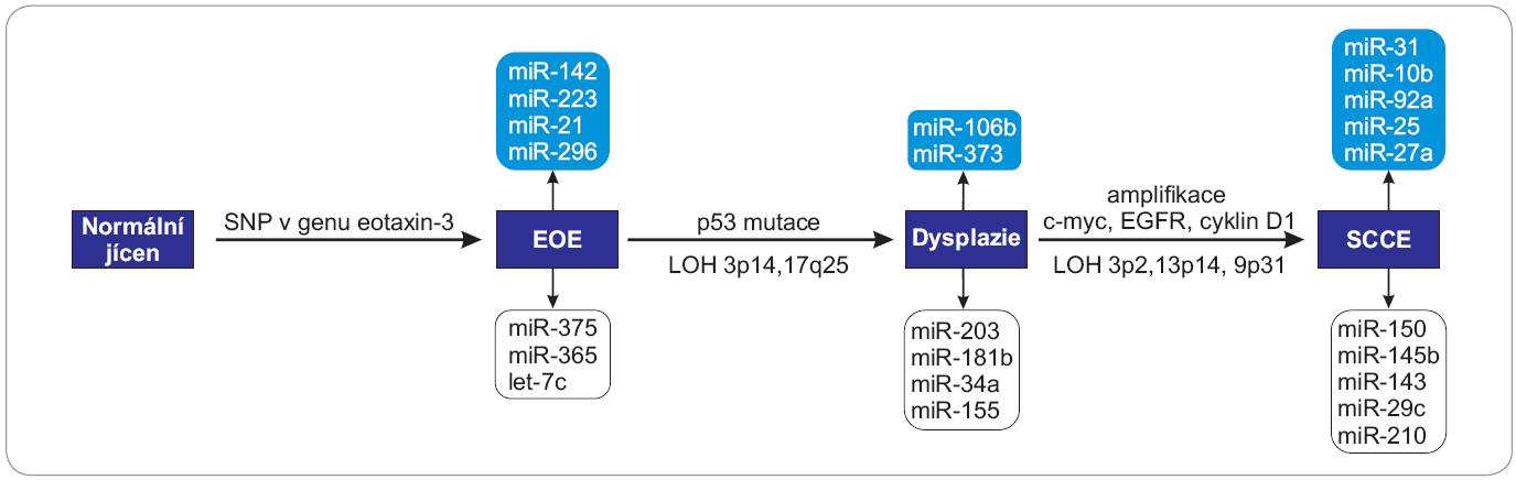 Schéma zapojení vybraných miRNA do patogeneze SCCE.