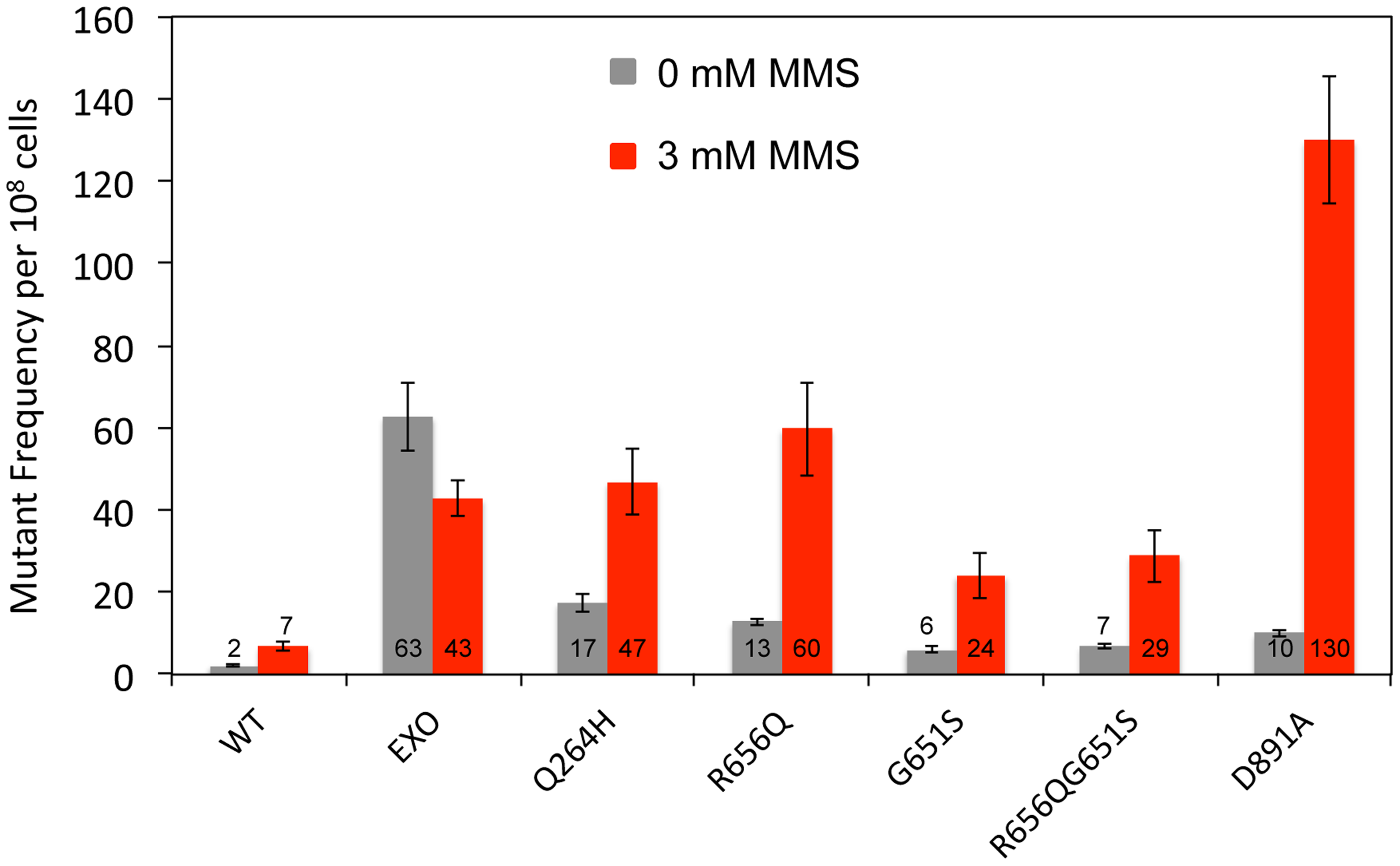 Mutations that disrupted Mip1 polymerase activity caused increased mutant frequency after MMS exposure.