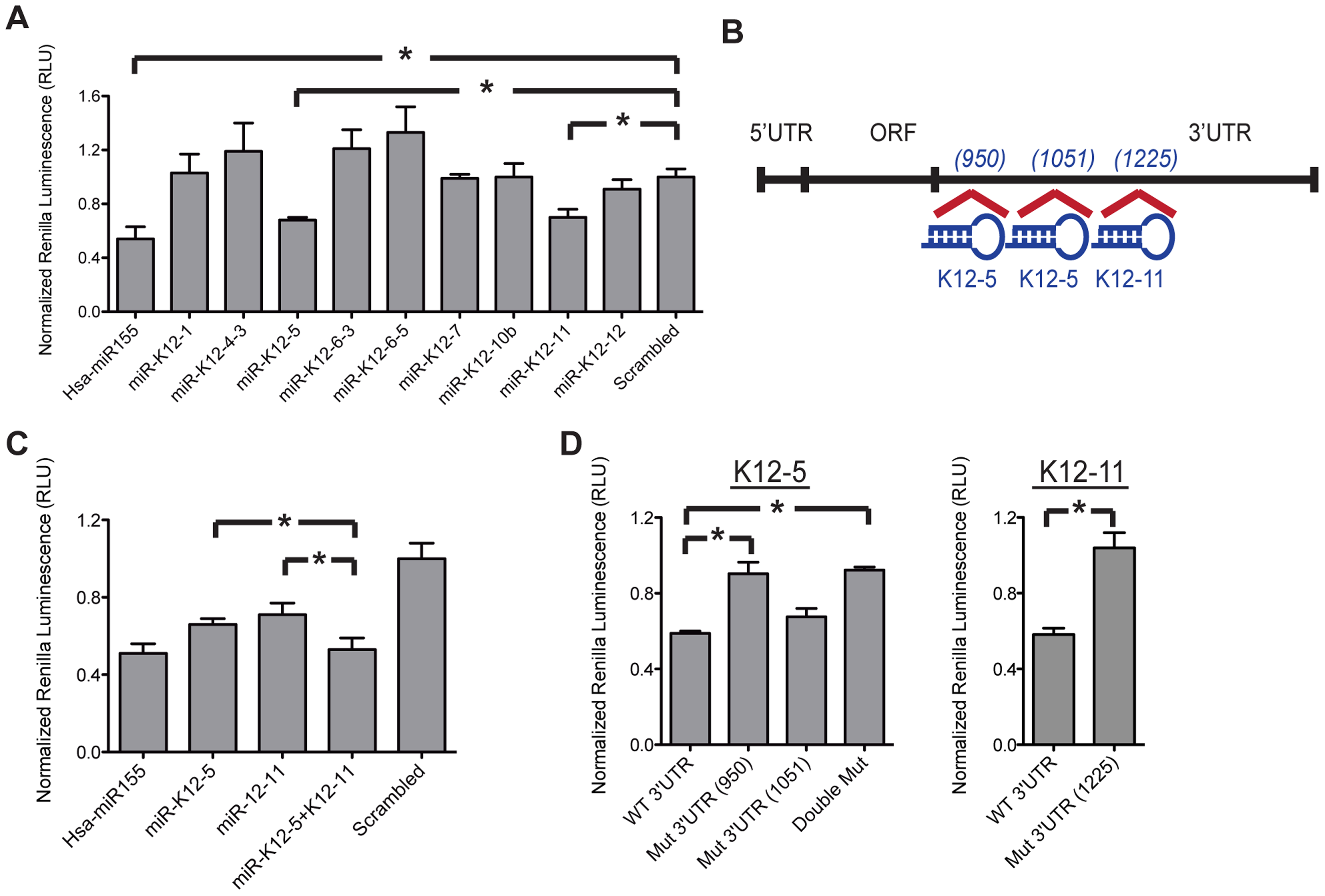 KSHV-encoded miRNAs directly target 3′UTR of AID.