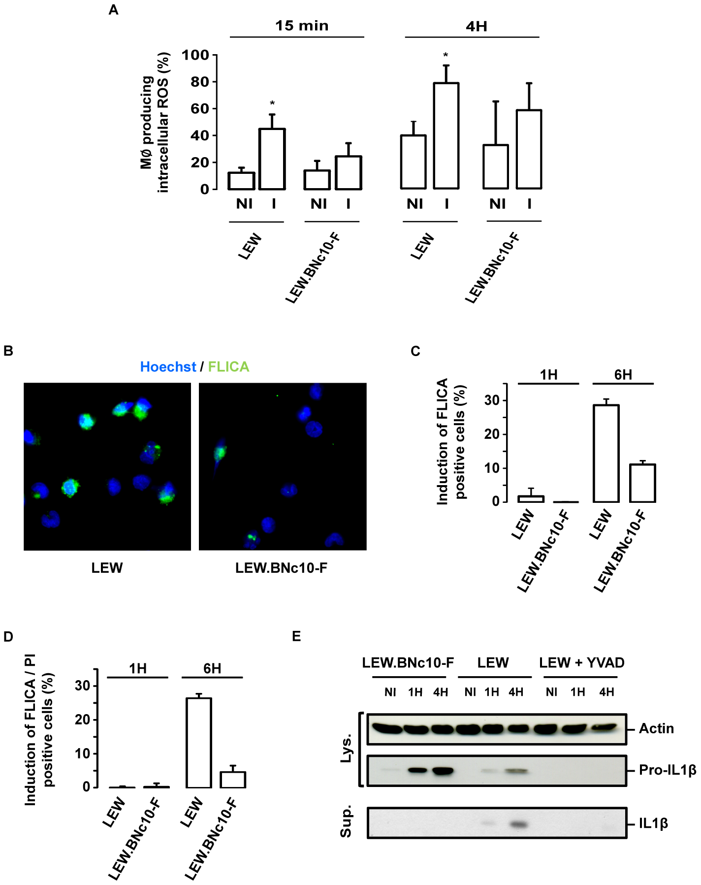 The <i>Toxo1</i>-mediated death of <i>T. gondii</i>-infected macrophages is associated to ROS production and caspase-1 activation.