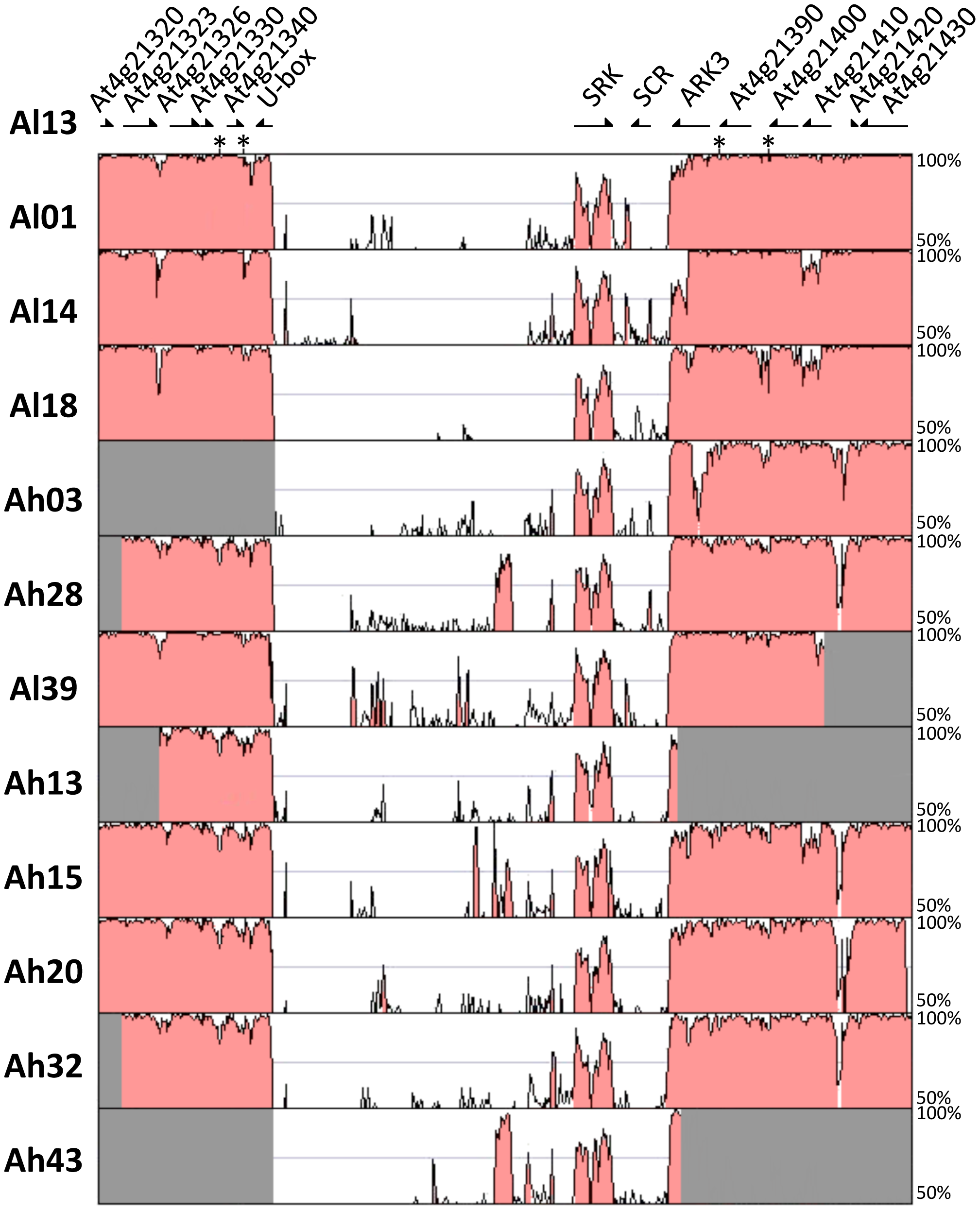 Sequence conservation in the S-locus region between <i>Al13</i> (the reference <i>A. lyrata</i> genome) and each of the other haplotypes.