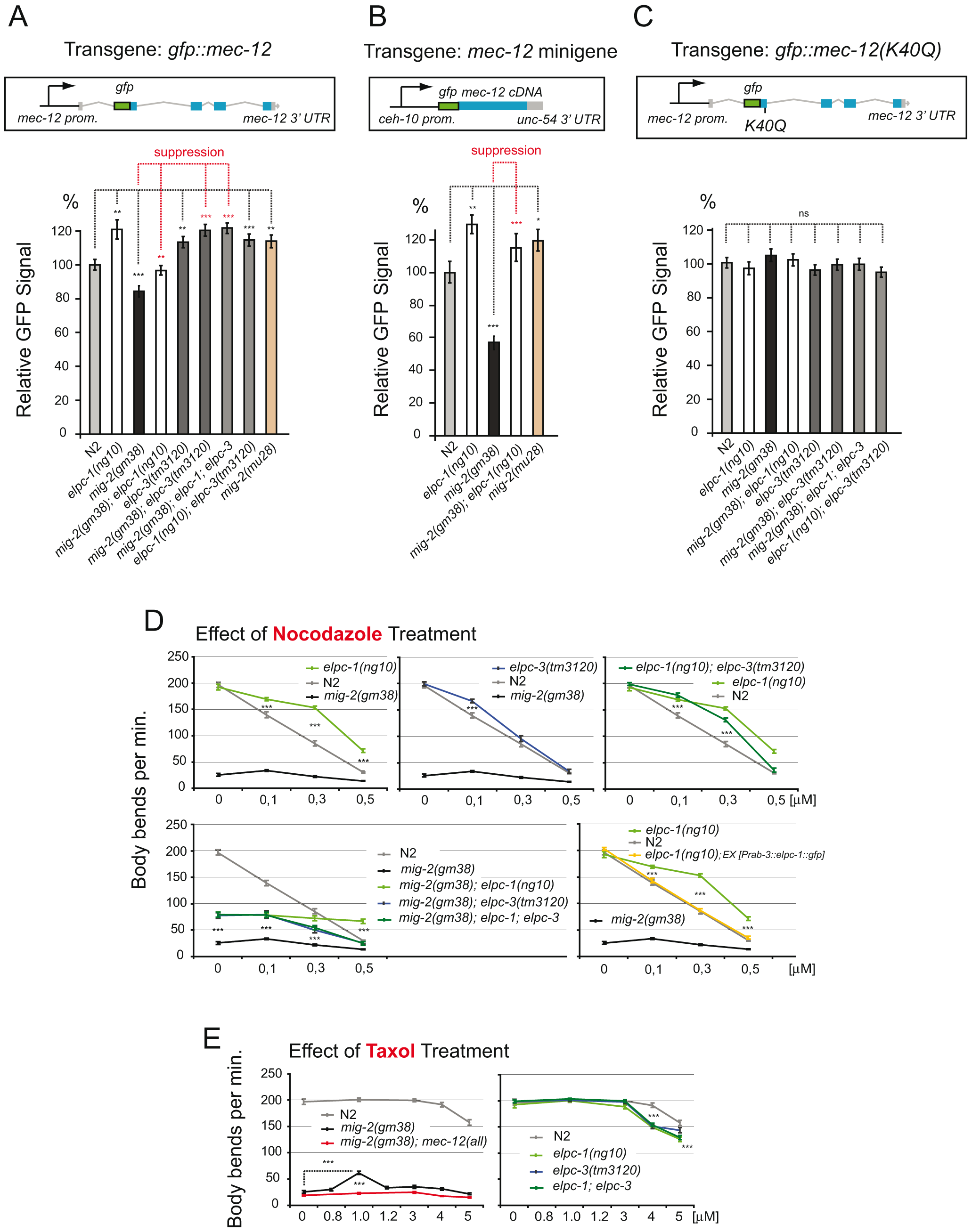 Regulation of MEC-12/α-tubulin levels depends on acetylation; response to nocodazole and taxol.