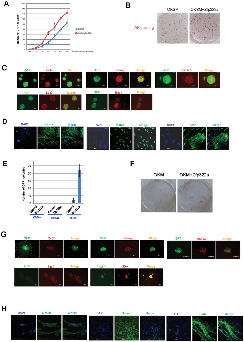 Zfp322a can enhance OSKM reprogramming and replace Sox2.
