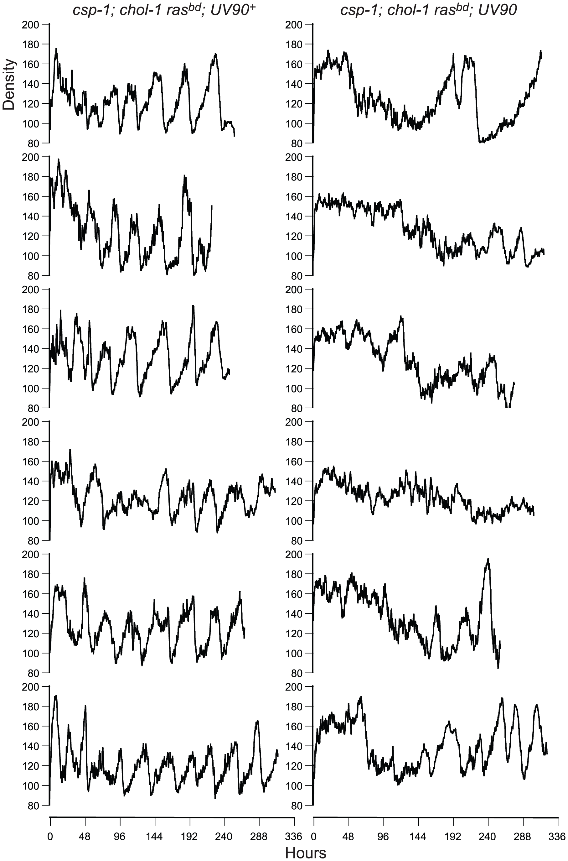 Densitometry of <i>chol-1</i>; <i>frq<sup>+</sup></i> progeny.