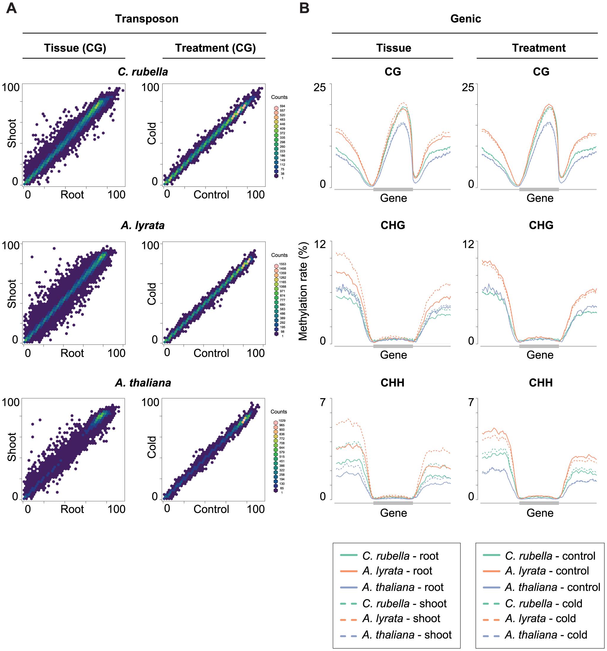 Intraspecific variation of transposon and gene body methylation.