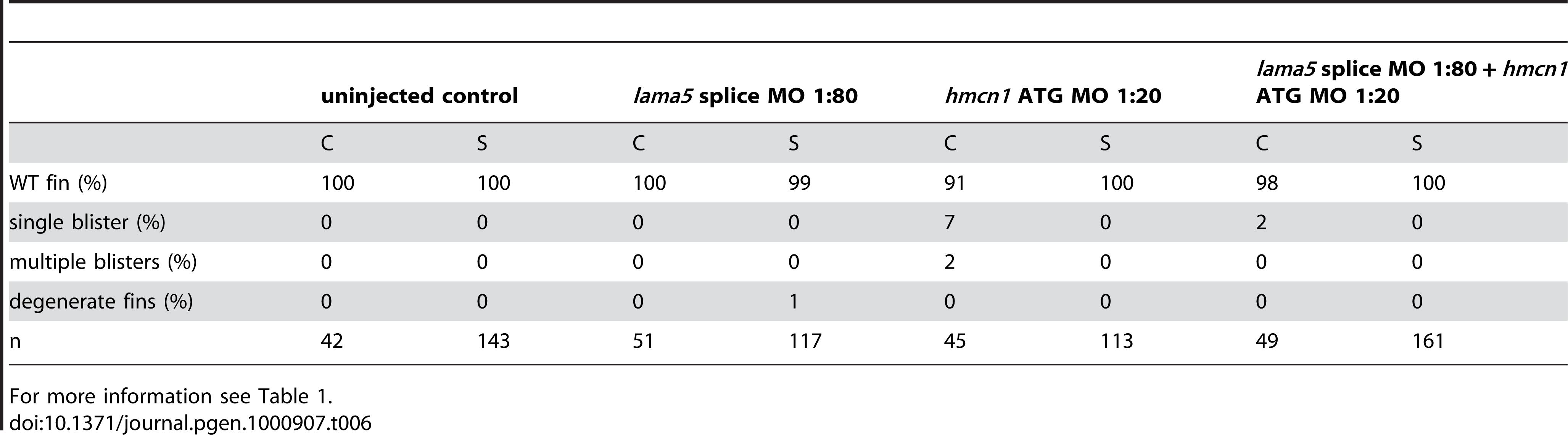 No synergistic interaction between <i>lama5</i> and <i>hmcn1</i>.
