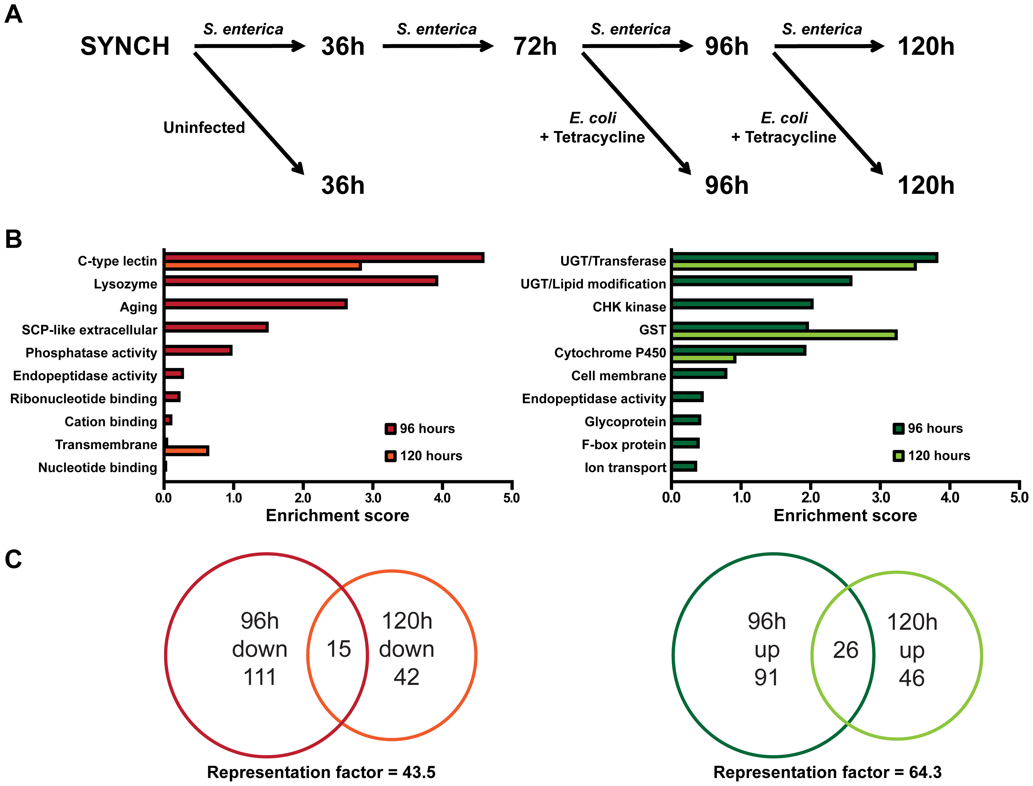 Whole genome expression analysis reveals down-regulated immune response genes and up-regulated detoxification genes during resolution of acute <i>S. enterica</i> infection.