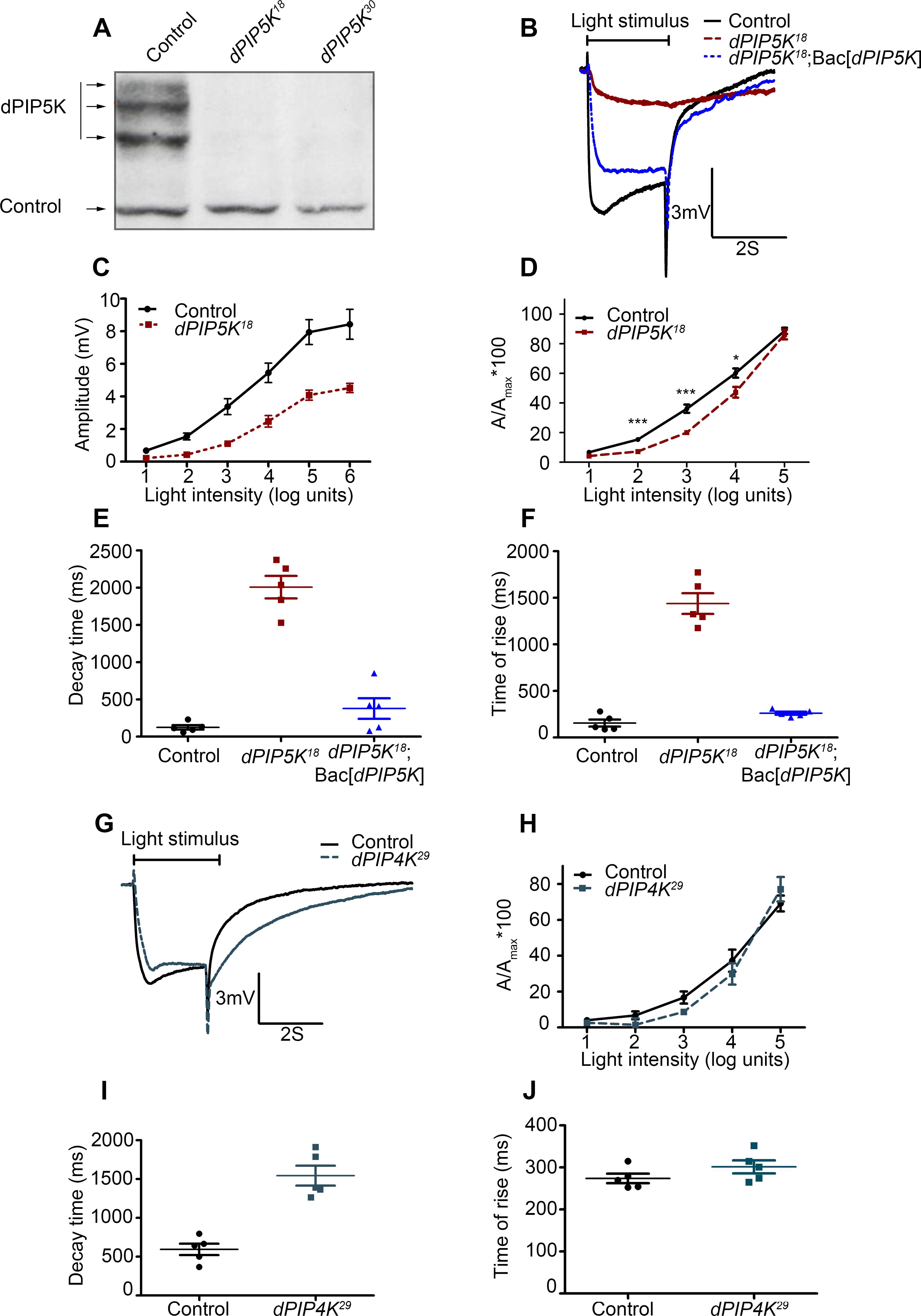 dPIP5K controls the light response in <i>Drosophila</i> photoreceptors.
