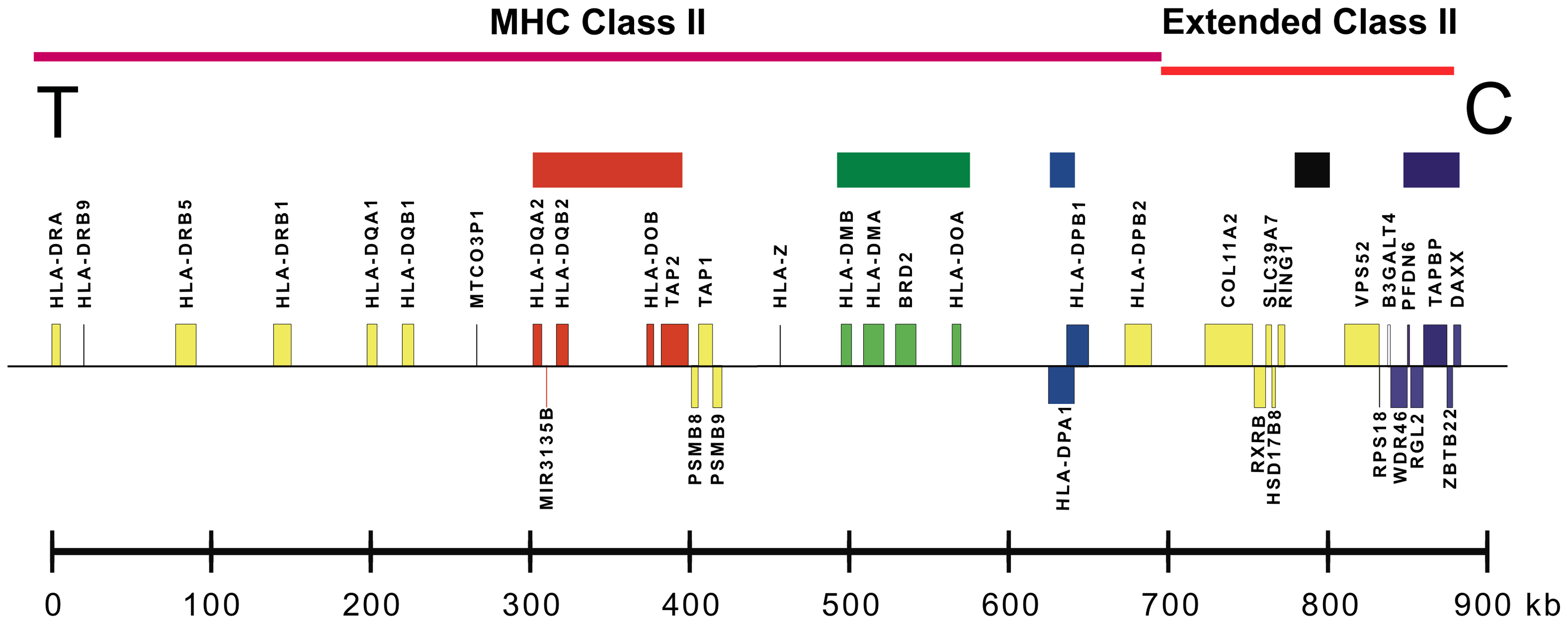 A map of the MHC class II and extended class II regions of chromosome 6p21.