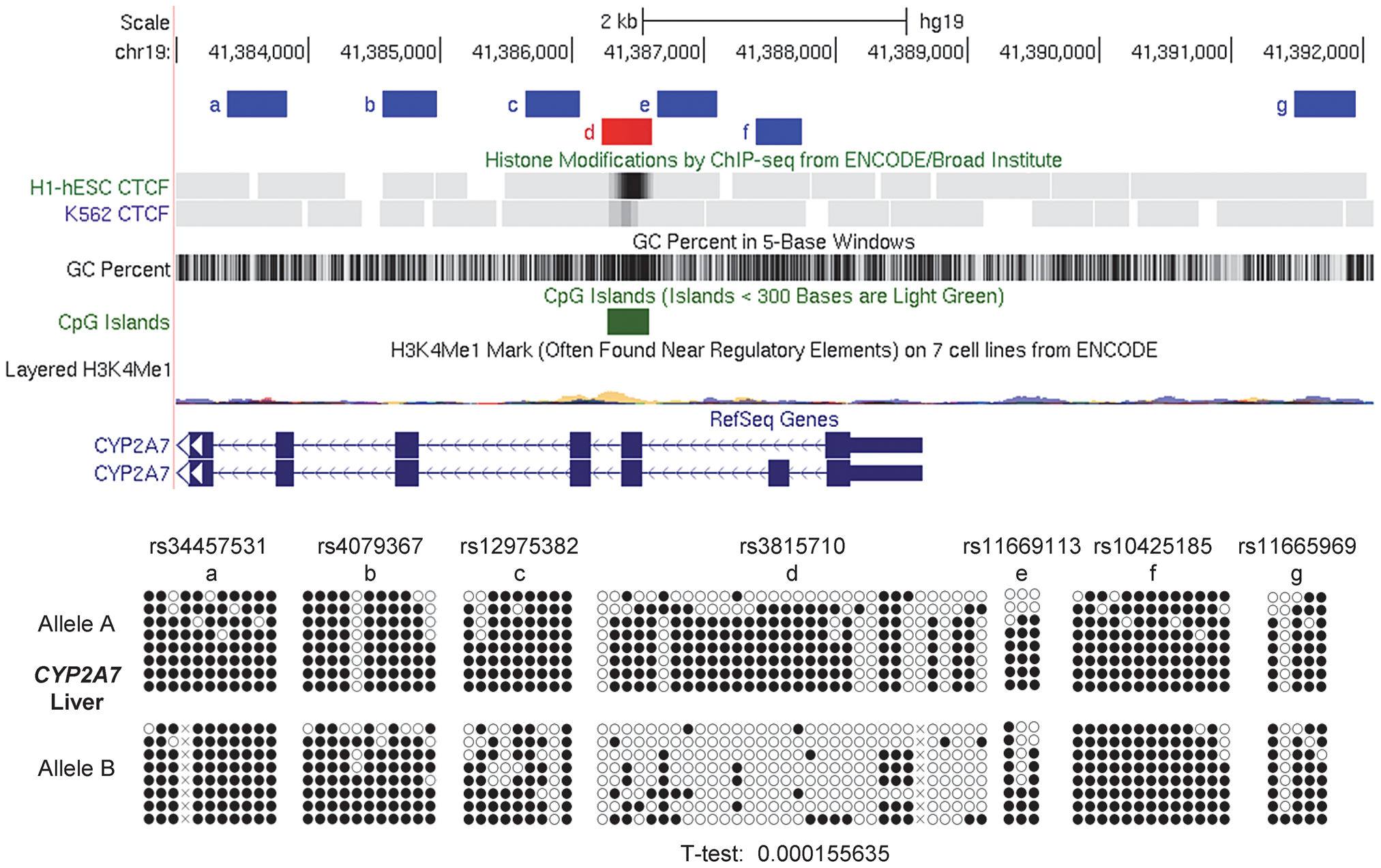 Local mapping of ASM in the <i>CYP2A7</i> gene shows a discrete DMR that precisely overlaps a CTCF binding site.