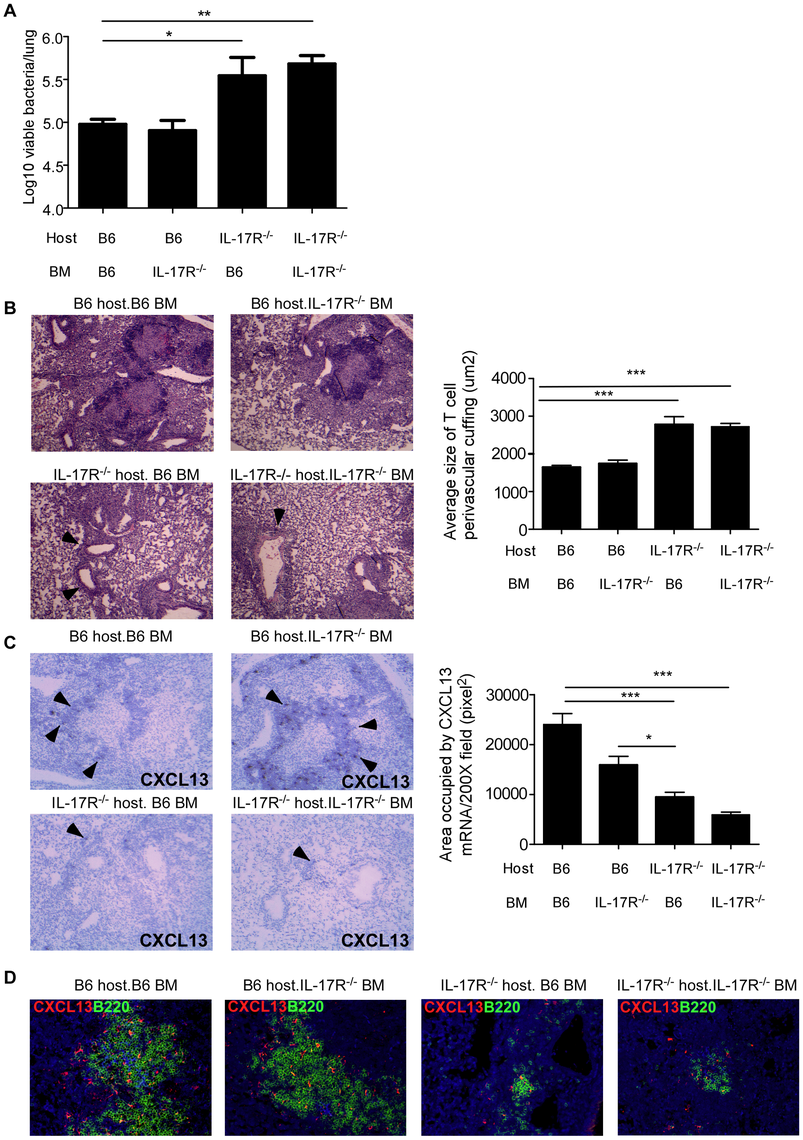 IL-17R expression on non-hematopoietic cells is required for protective immunity against <i>Mtb</i> HN878.