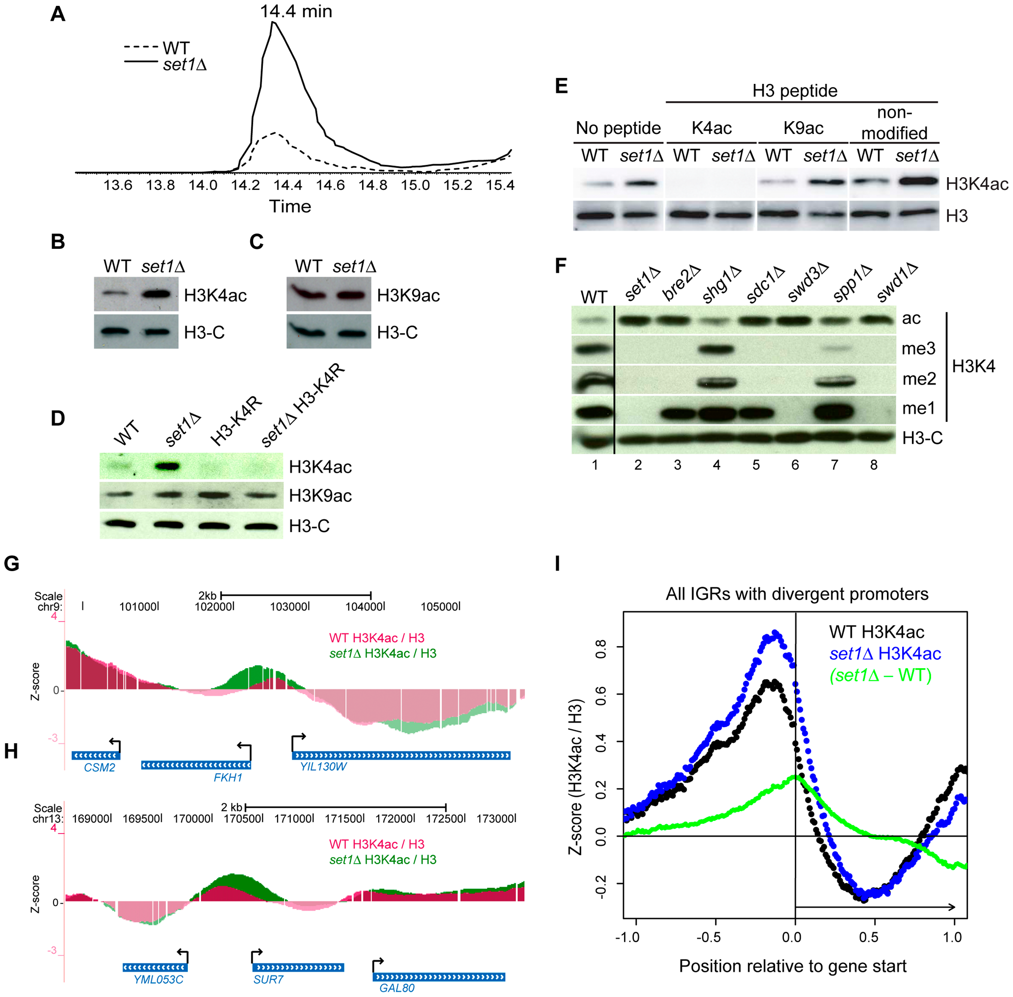 The COMPASS Complex Limits Global Levels of H3K4ac and Confines H3K4ac Localisation to Promoter Regions.