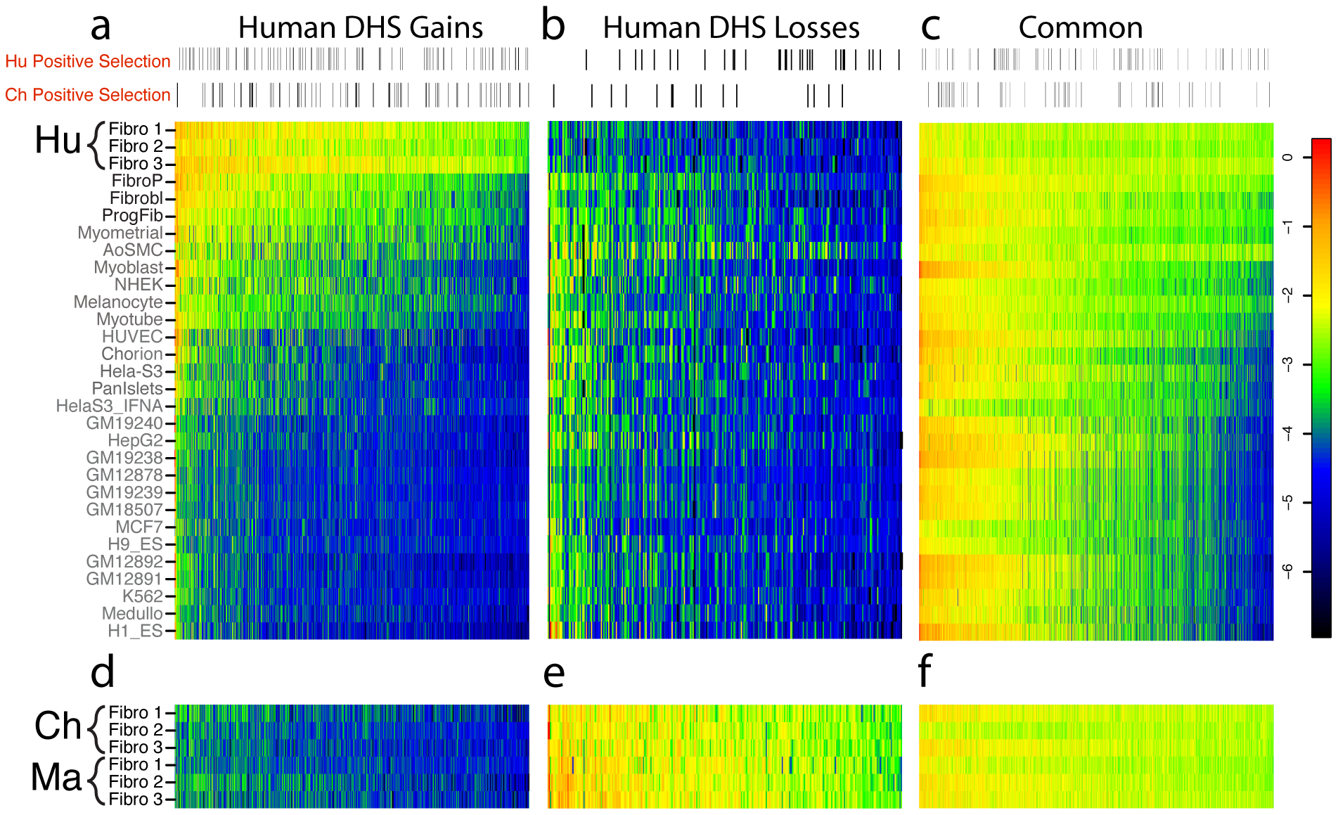 Comparison of human DHS site gains and losses to DNase-seq data from other human cell types.