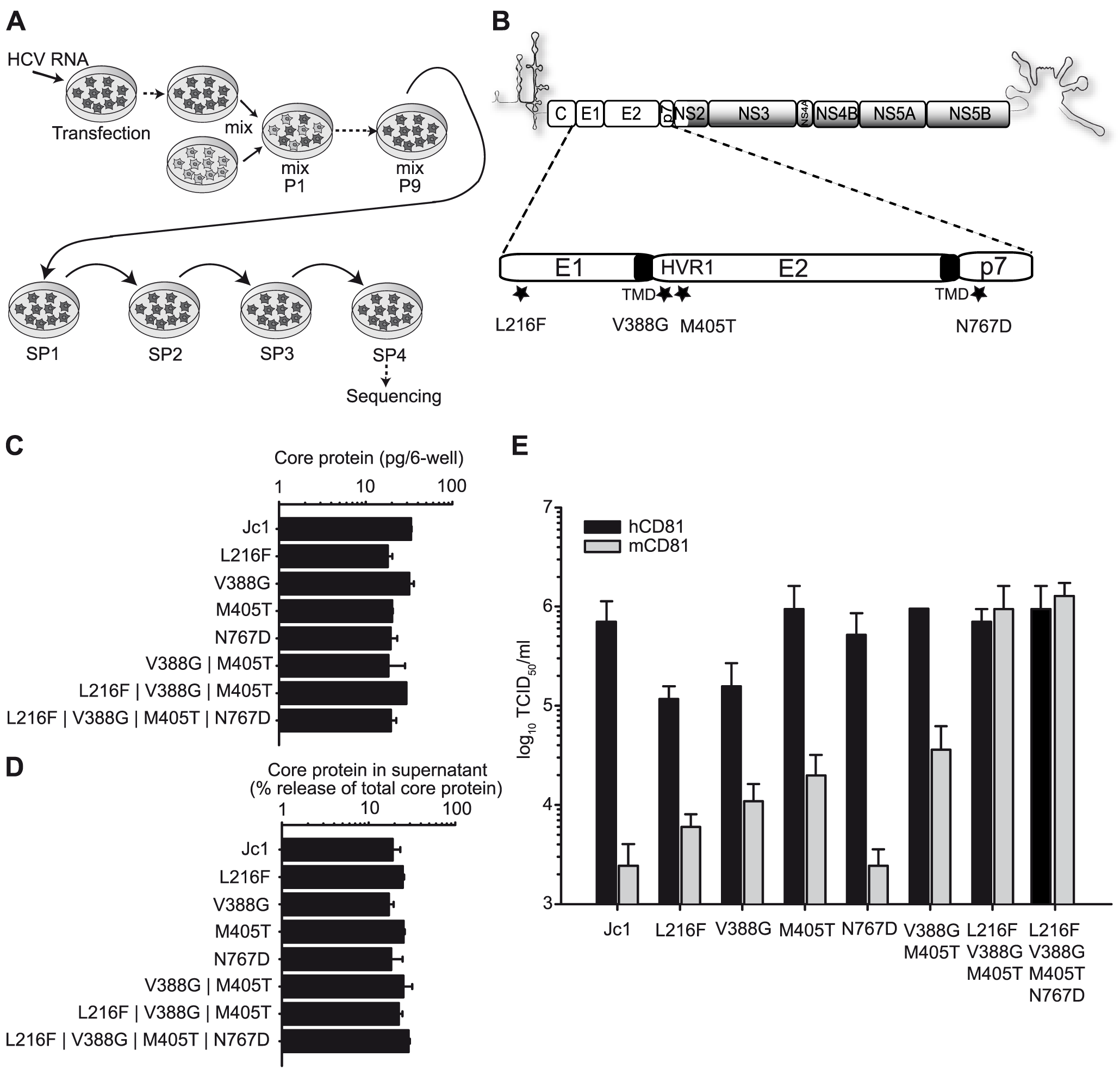 Adaptation of Jc1 to mouse CD81.